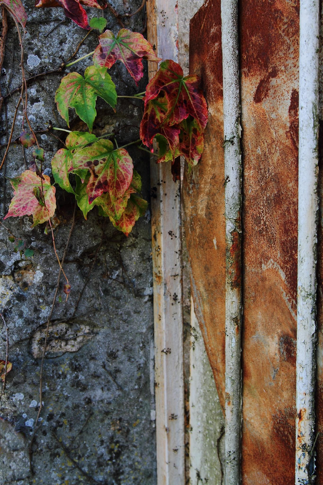 Fall foliage and rust by SHOUT