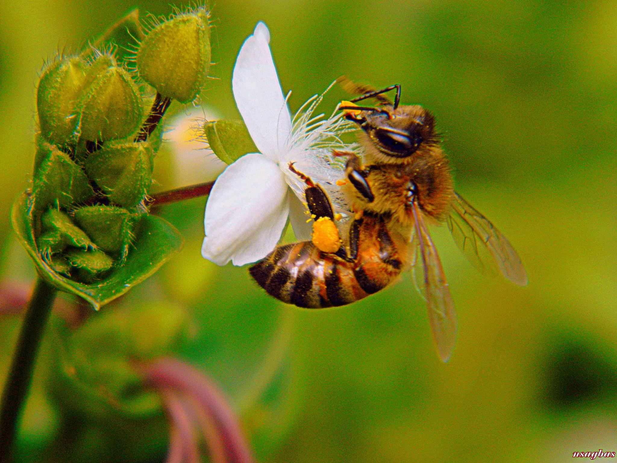 NATURAL FLOWERS AND BEE... by Karadag