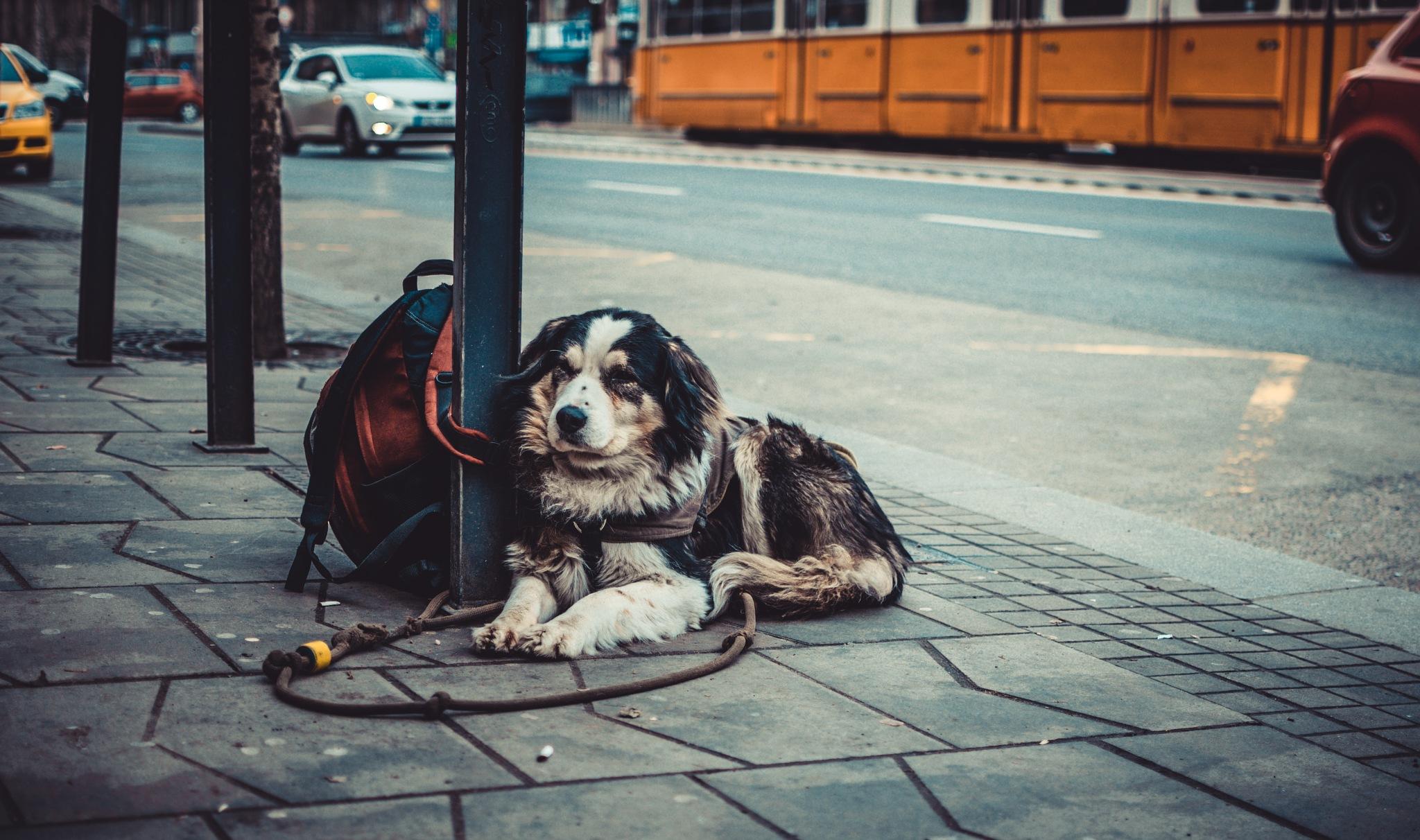 waiting . . . by Szabó Viktor