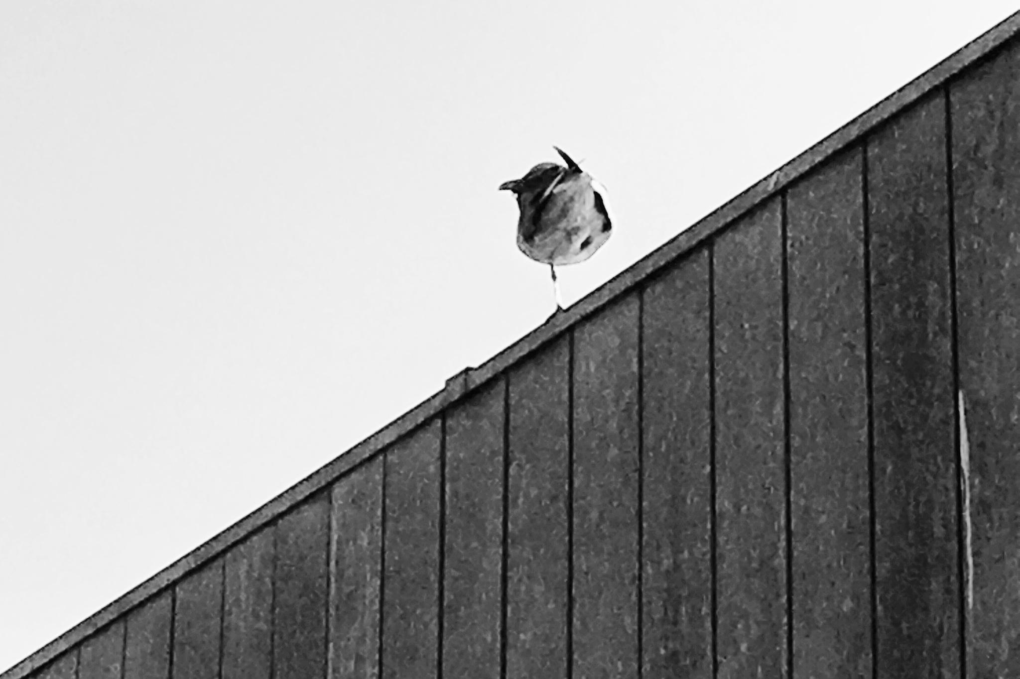 One leg bird by jmatela