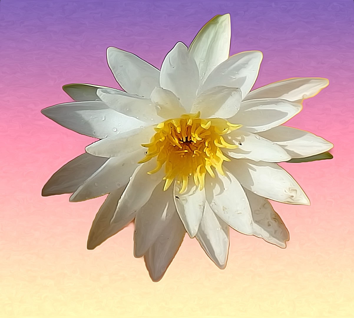 White Water Lilly by kstand