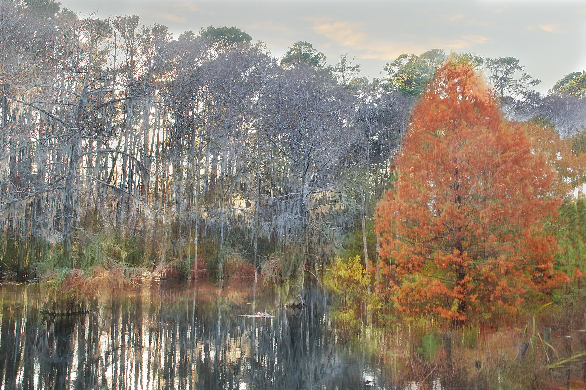 Coloful Cypress  by kstand