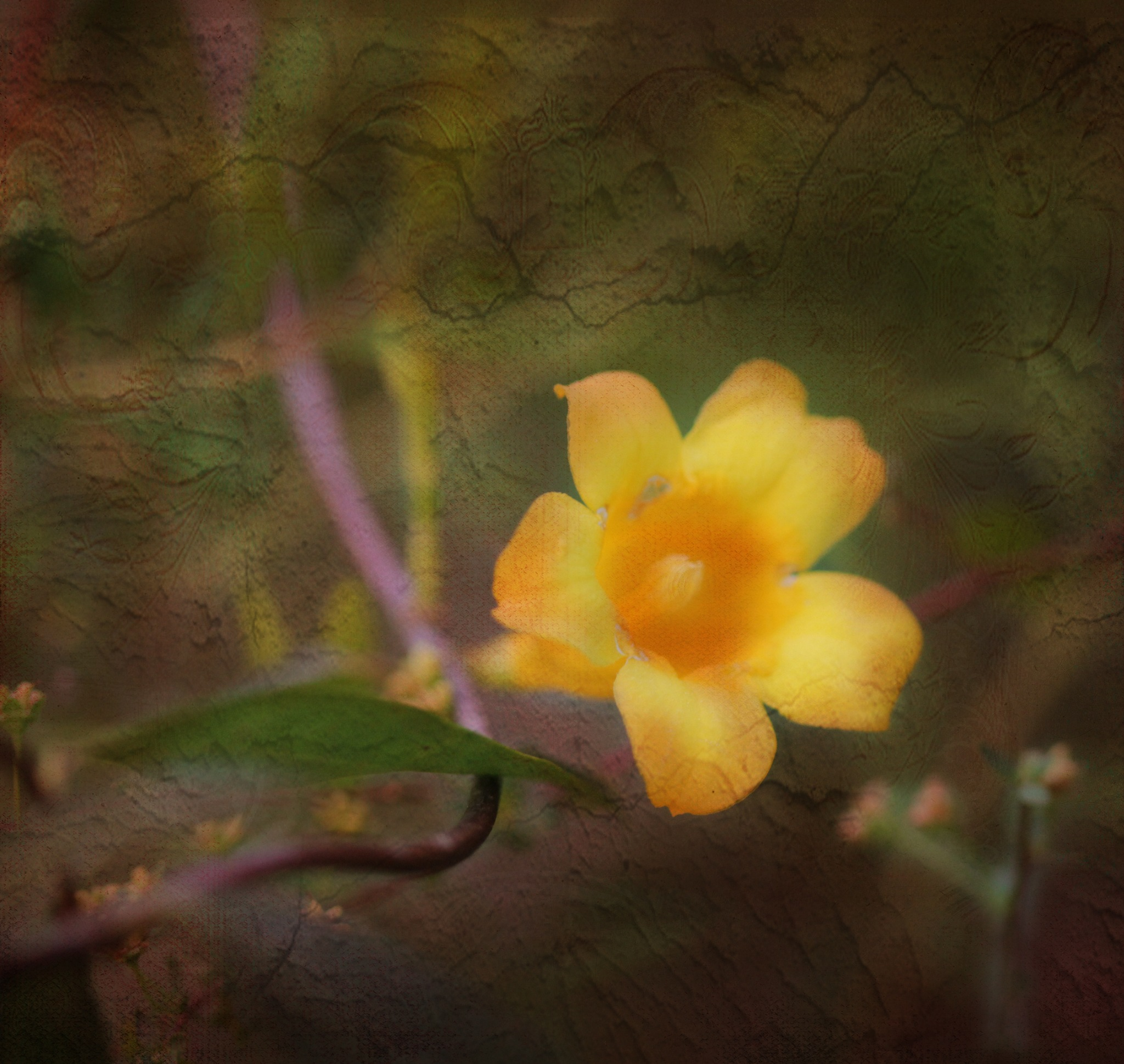 Little Yellow Flower by kstand