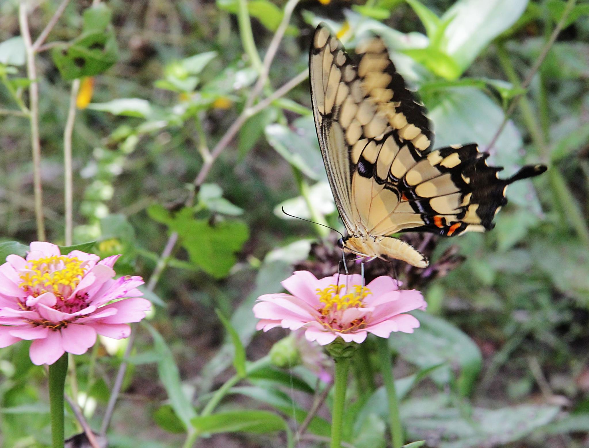 Fluttering  by kstand