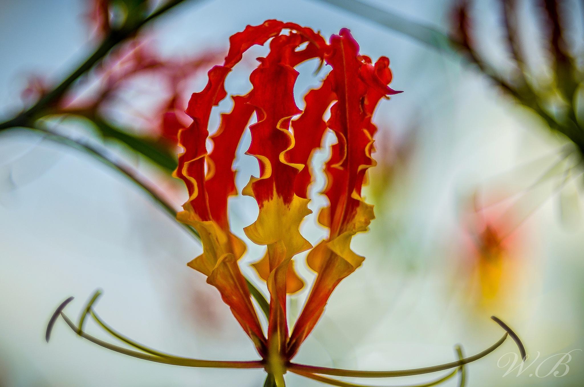 flowers  by plenitudephotography