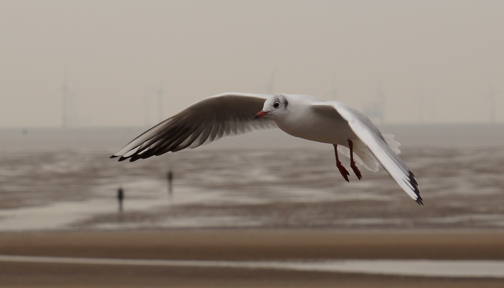 Another Seagull by Steve Smith