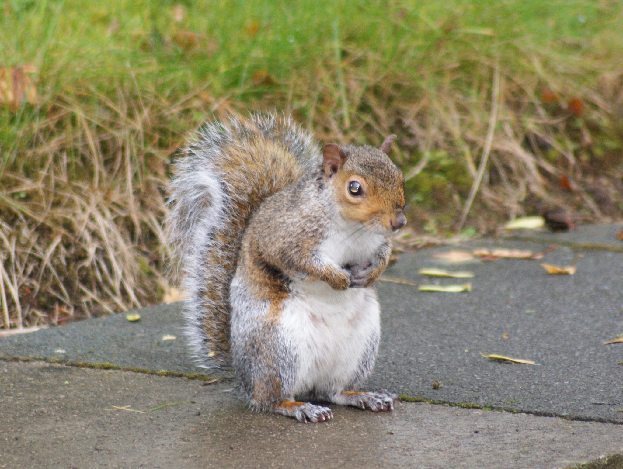 squirrel by Steve Smith