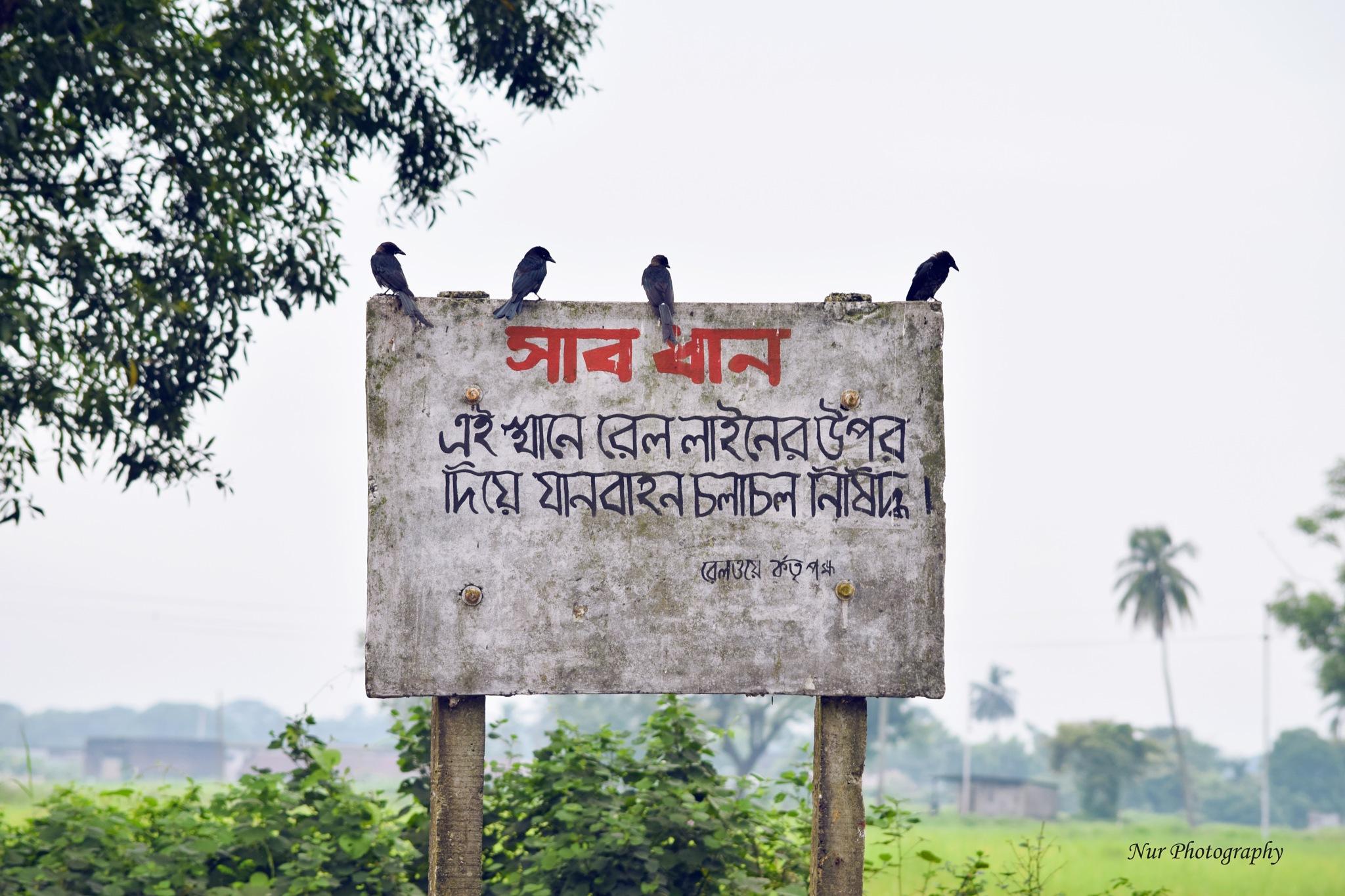 Deathwatch of Bangladesh Railway by Nur_Nobi