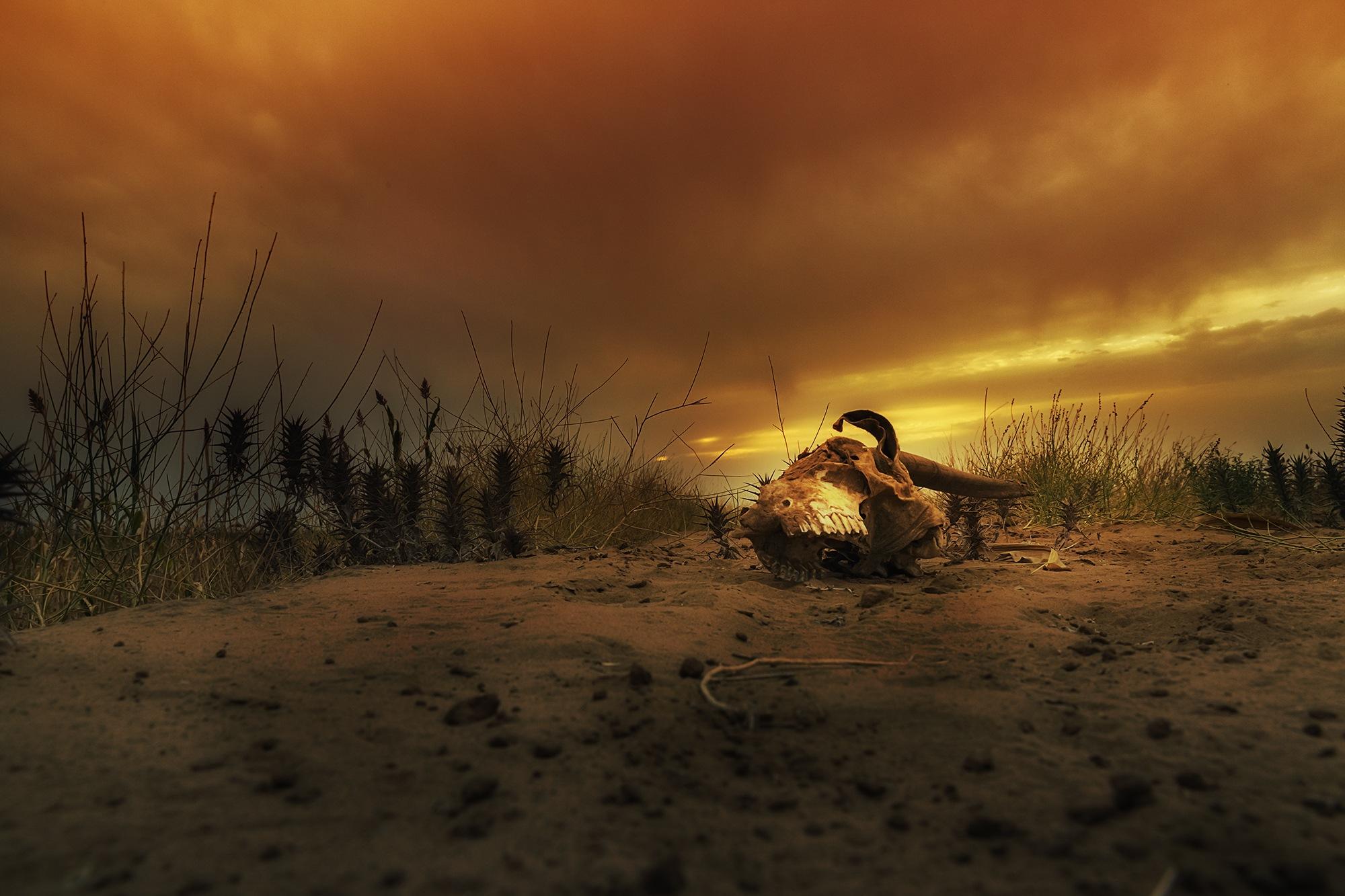 The End by Basim Al-Hamali