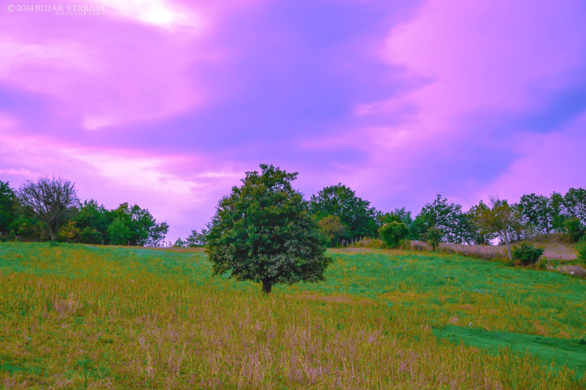 NATURE by Bujar Vërbani