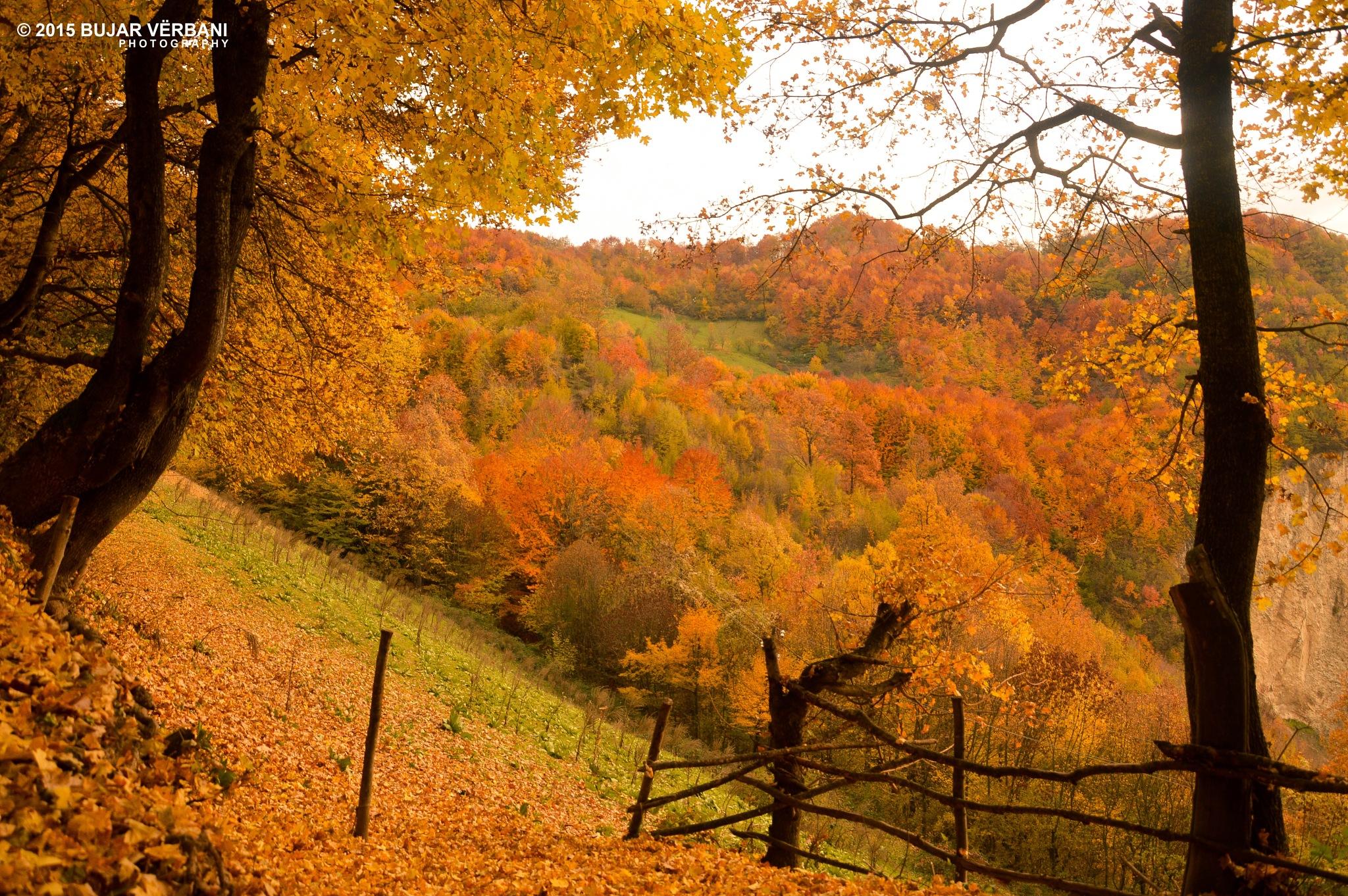 Colors of Autumn by Bujar Vërbani