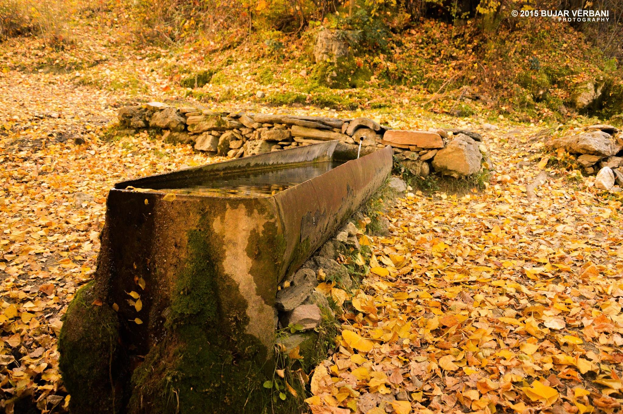 Water Place in autmn by Bujar Vërbani