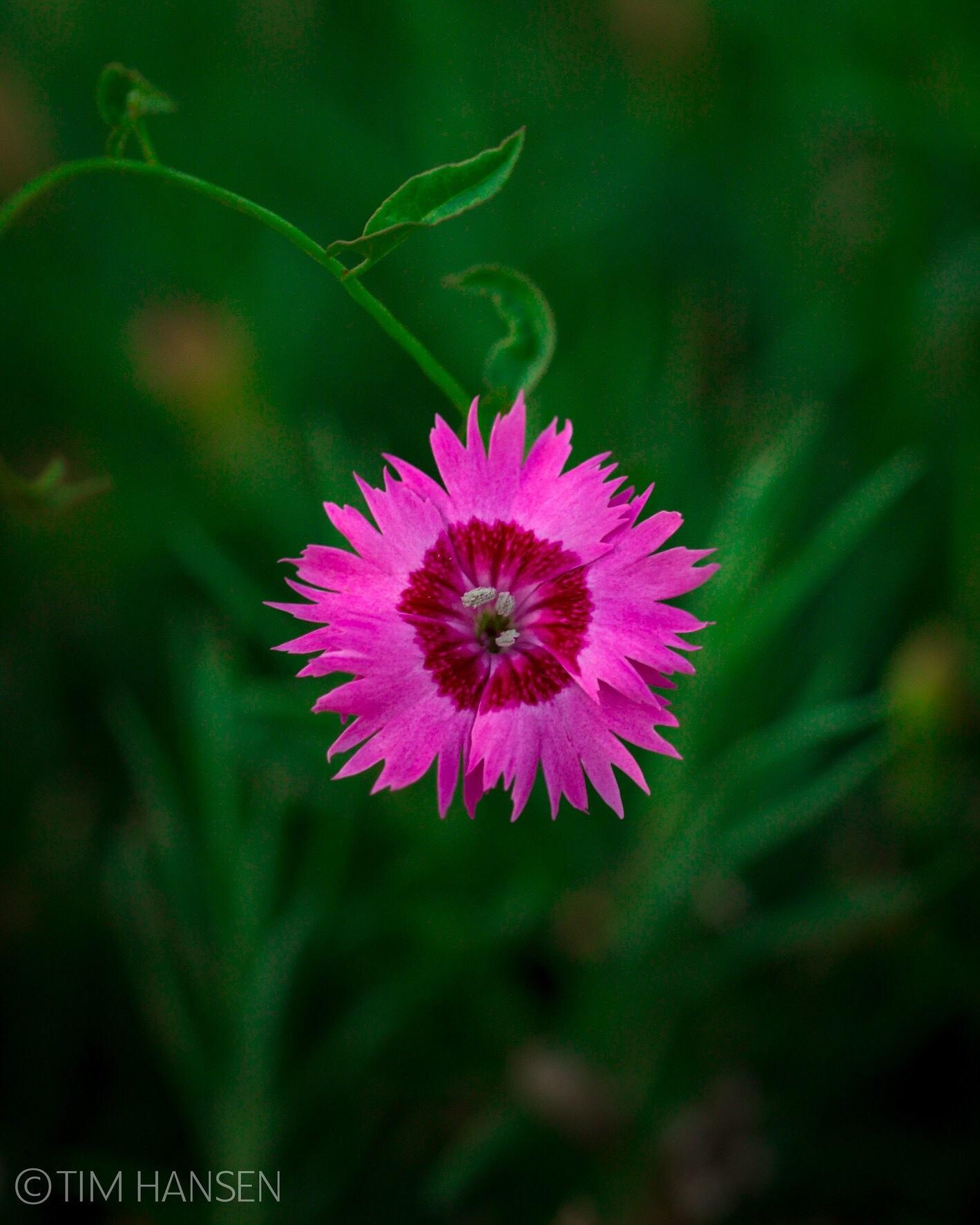 Wildflower macro by Tim Hansen