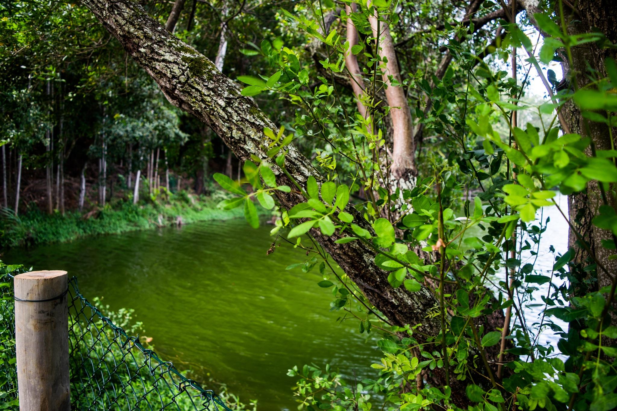 Lagoa Parque Botânico da Vale by Leandro Moura
