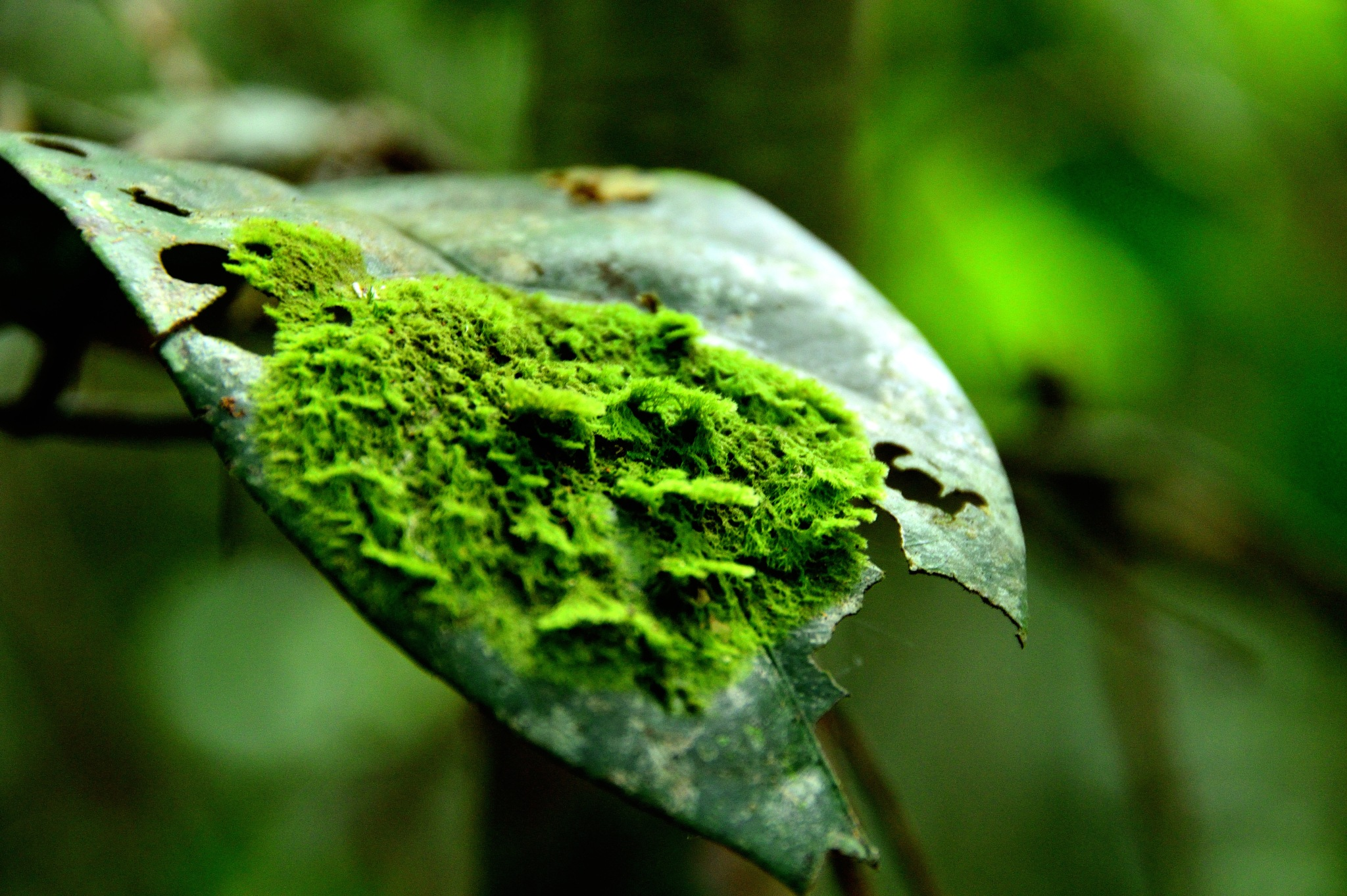 Moss by CaballerodeGracia