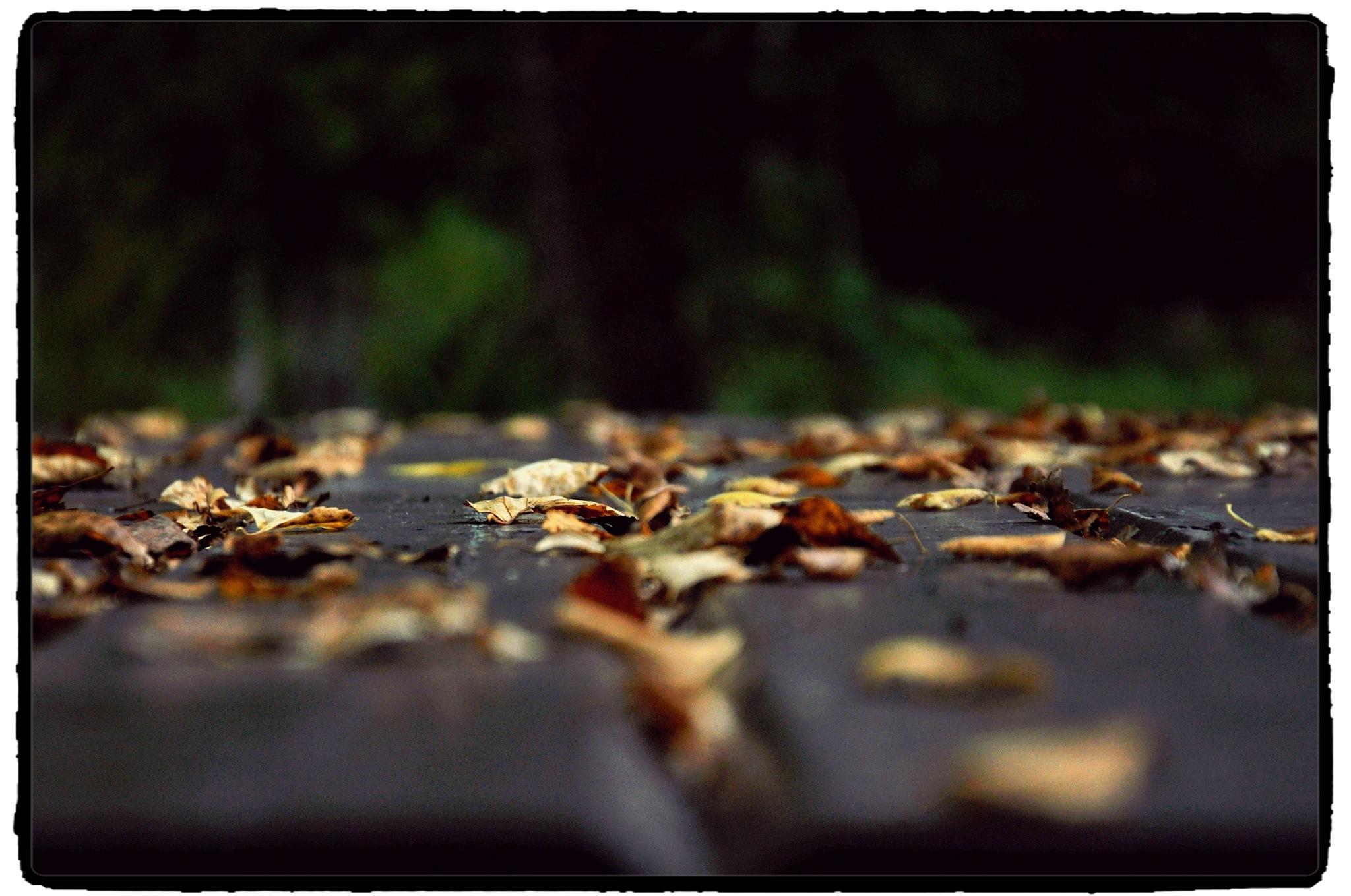 Autumn mood... by Tatti  Zhuk