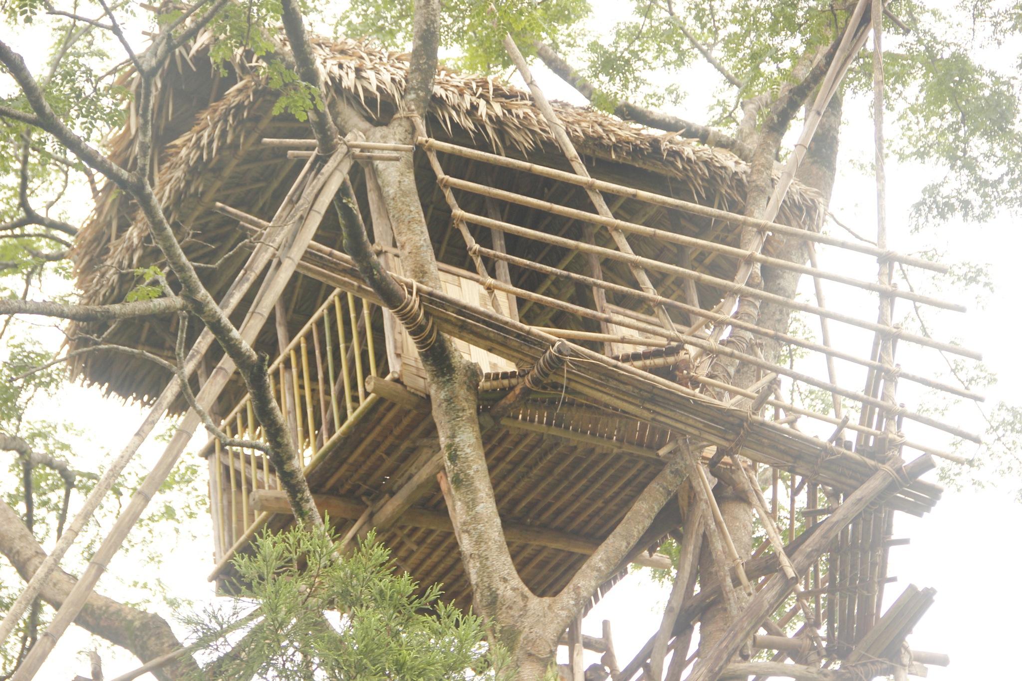 Tree House by JuliettChakraborty