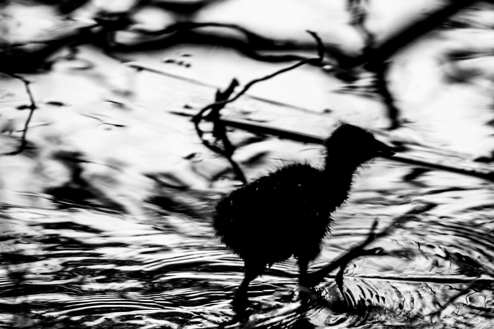 Baby bird by Peter CJ Buchanan