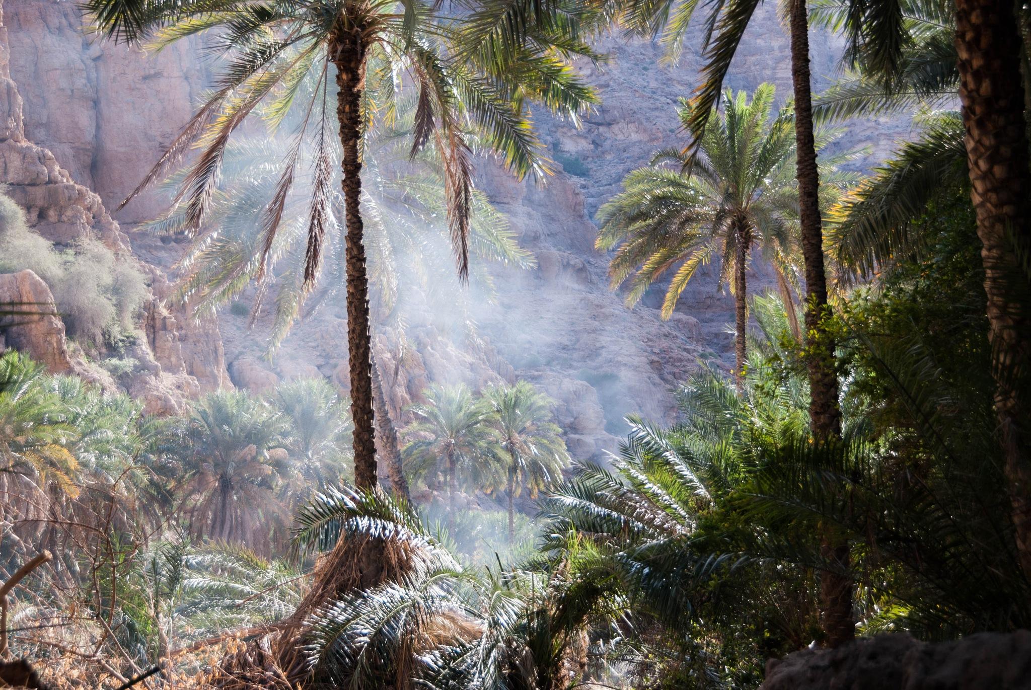 Wadi Oman 2007 by Ruud van Leeuwen