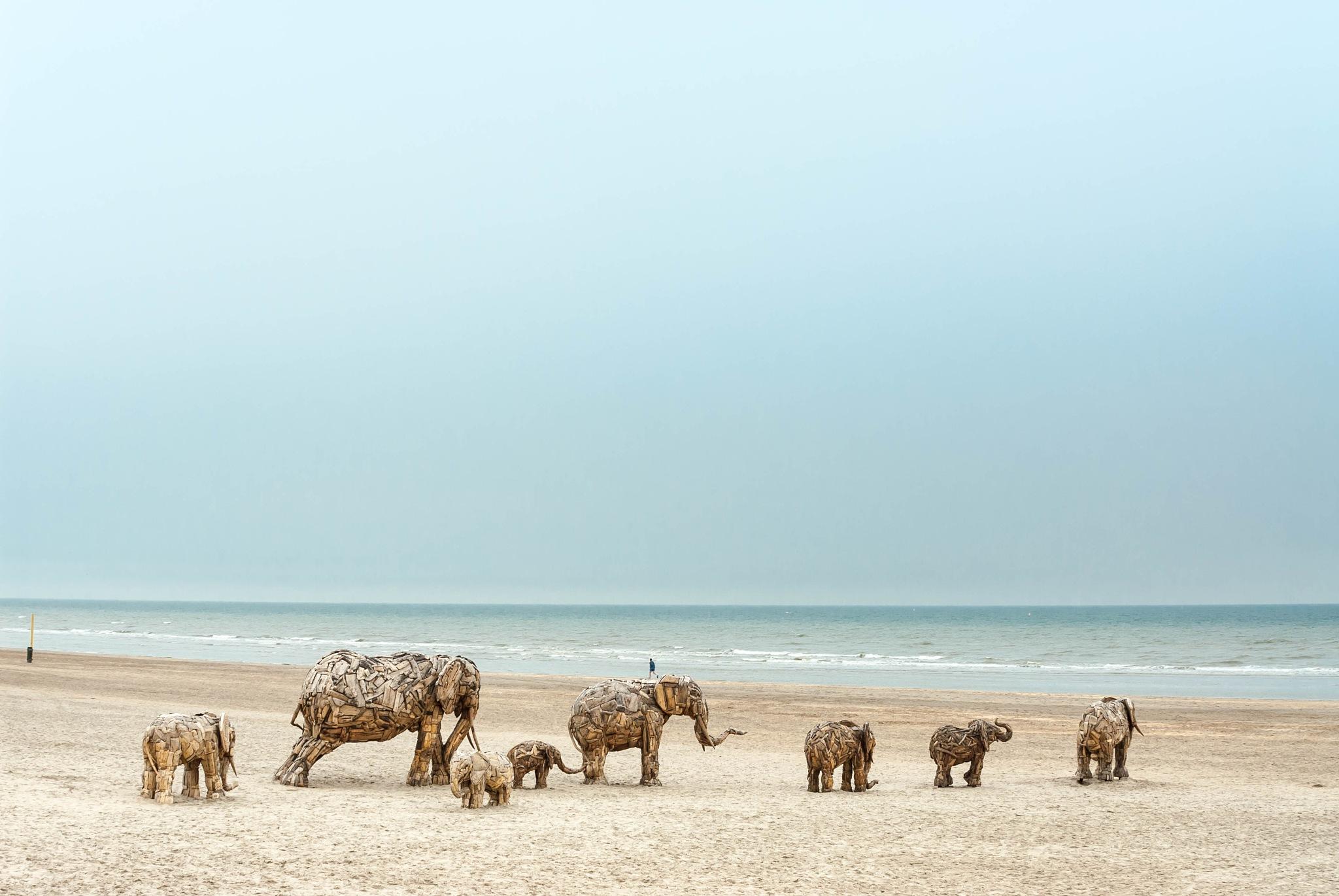 Wooden elephants, Beaufort 2006 by Ruud van Leeuwen