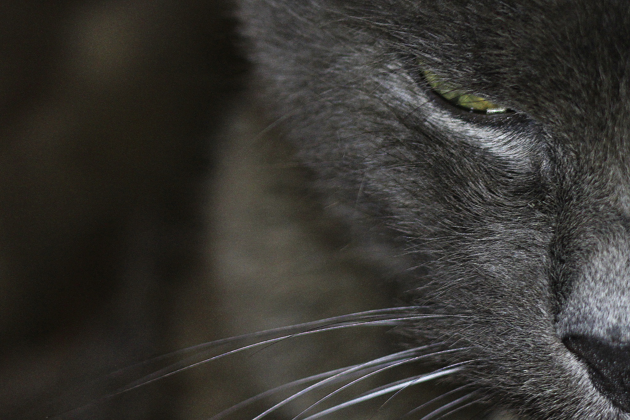 le chat  - the cat  by .