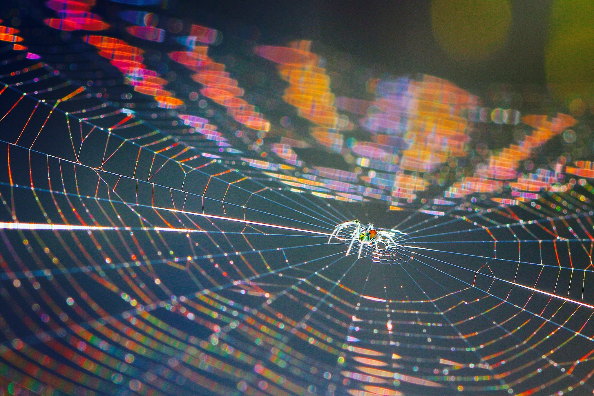 Orchard Spider in Rainbow Web by MyMagnolia
