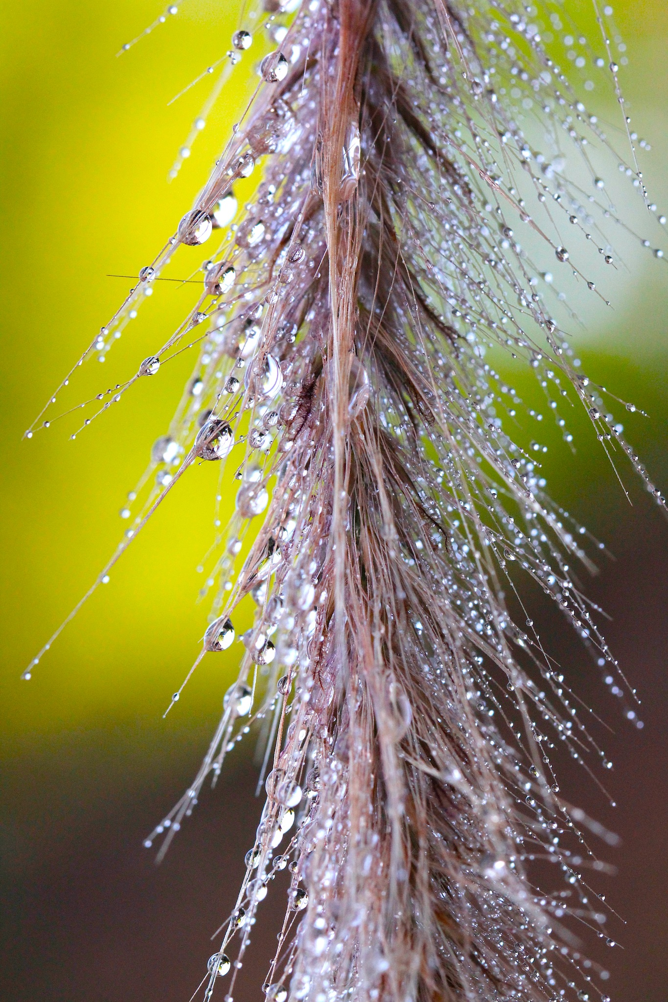 Grass Refractions by MyMagnolia