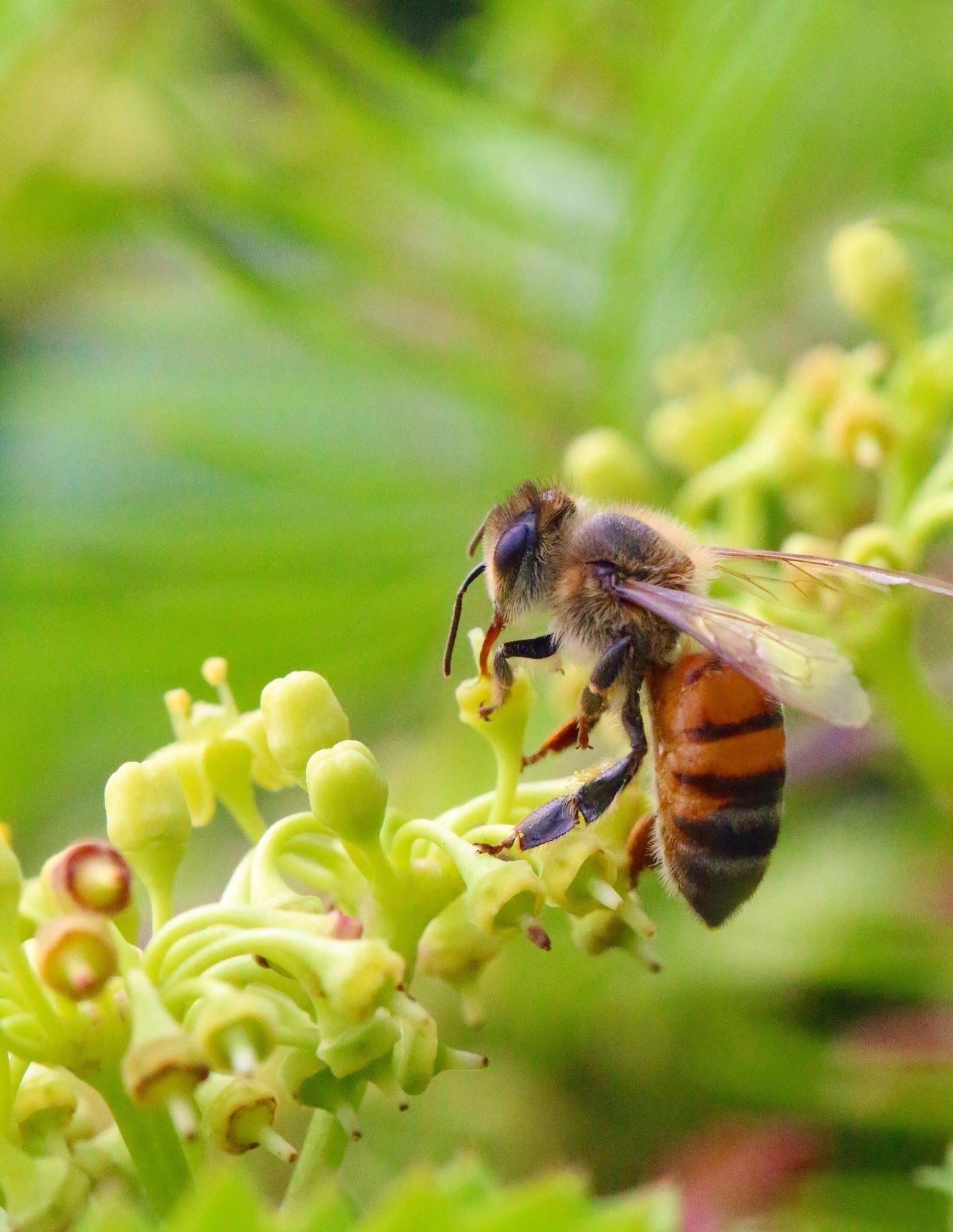 Little Honey Bee by MyMagnolia
