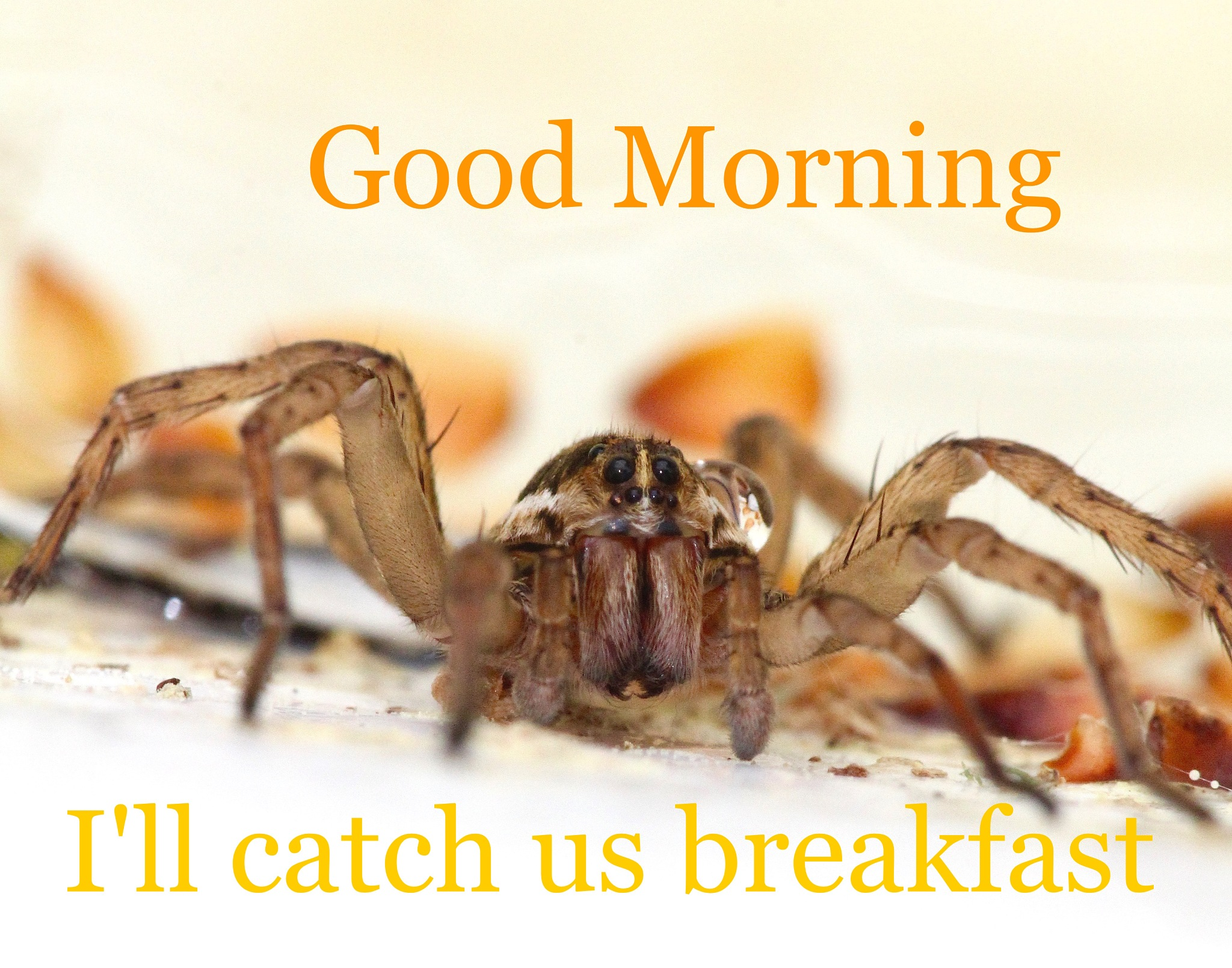 Good Morning Spider by MyMagnolia