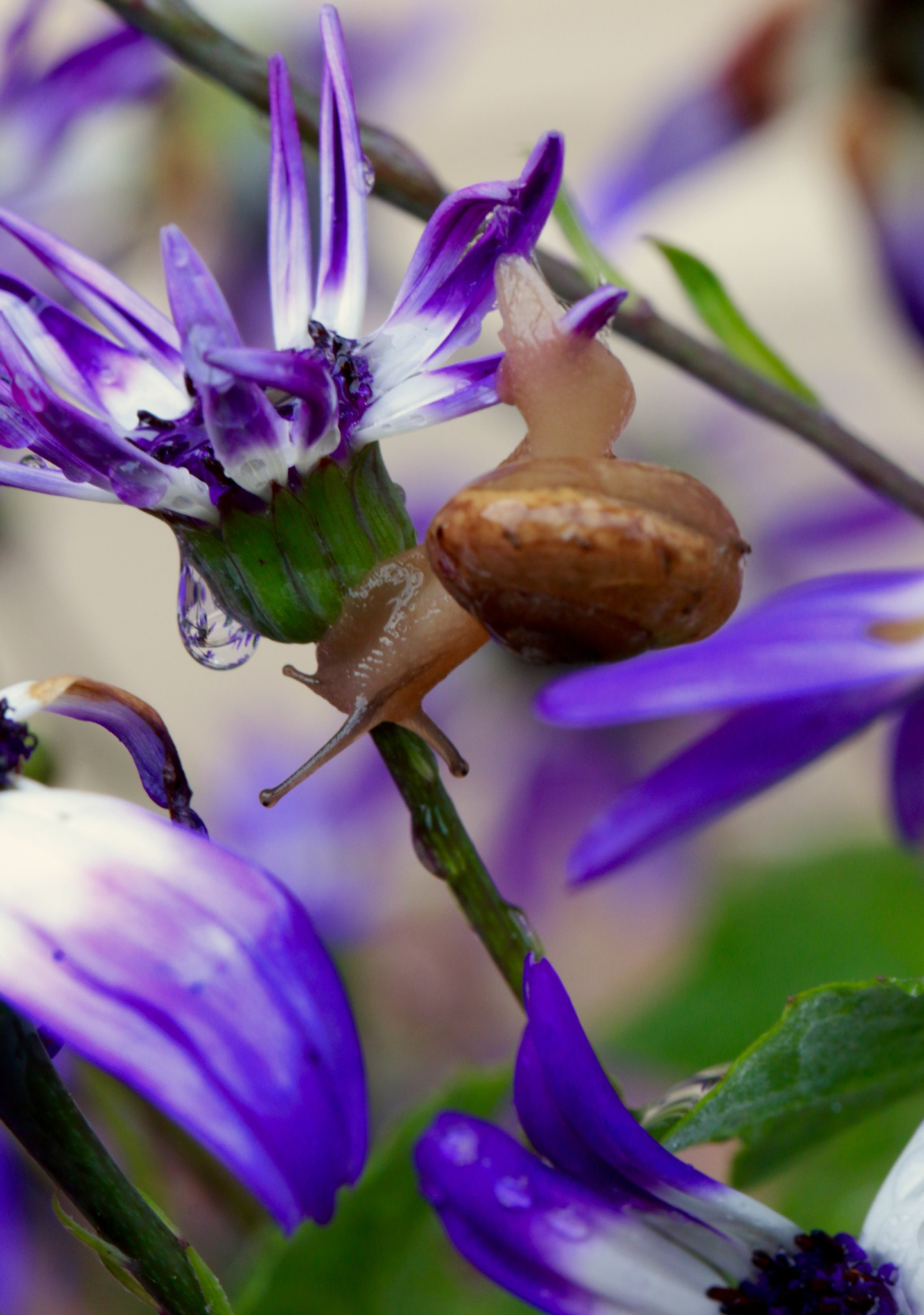 Garden Snail With Refraction by MyMagnolia
