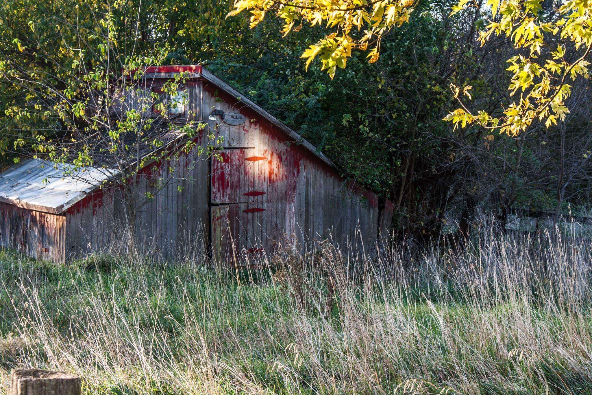 Shed  by Mercedes Tortat