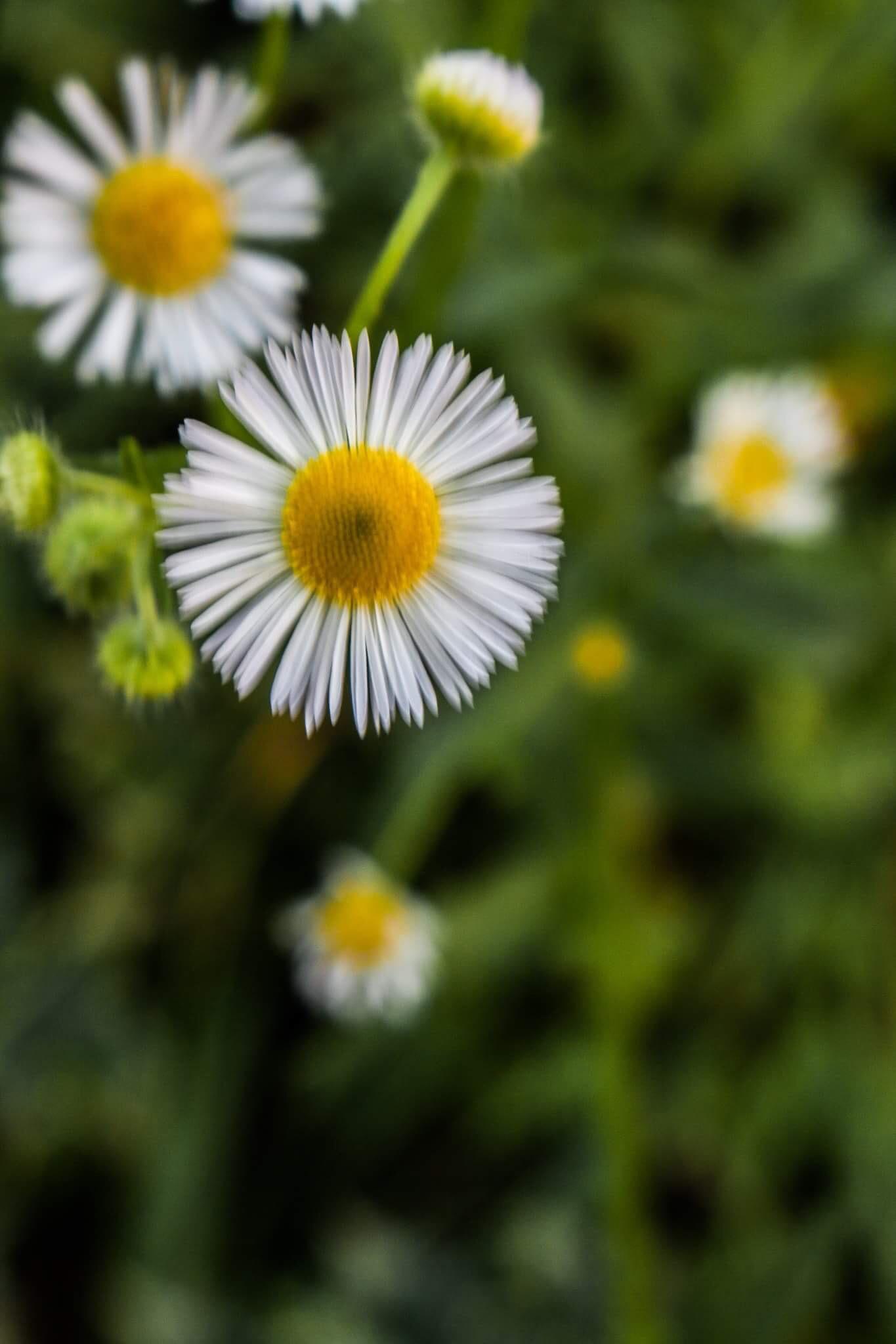 Flower by Mercedes Tortat