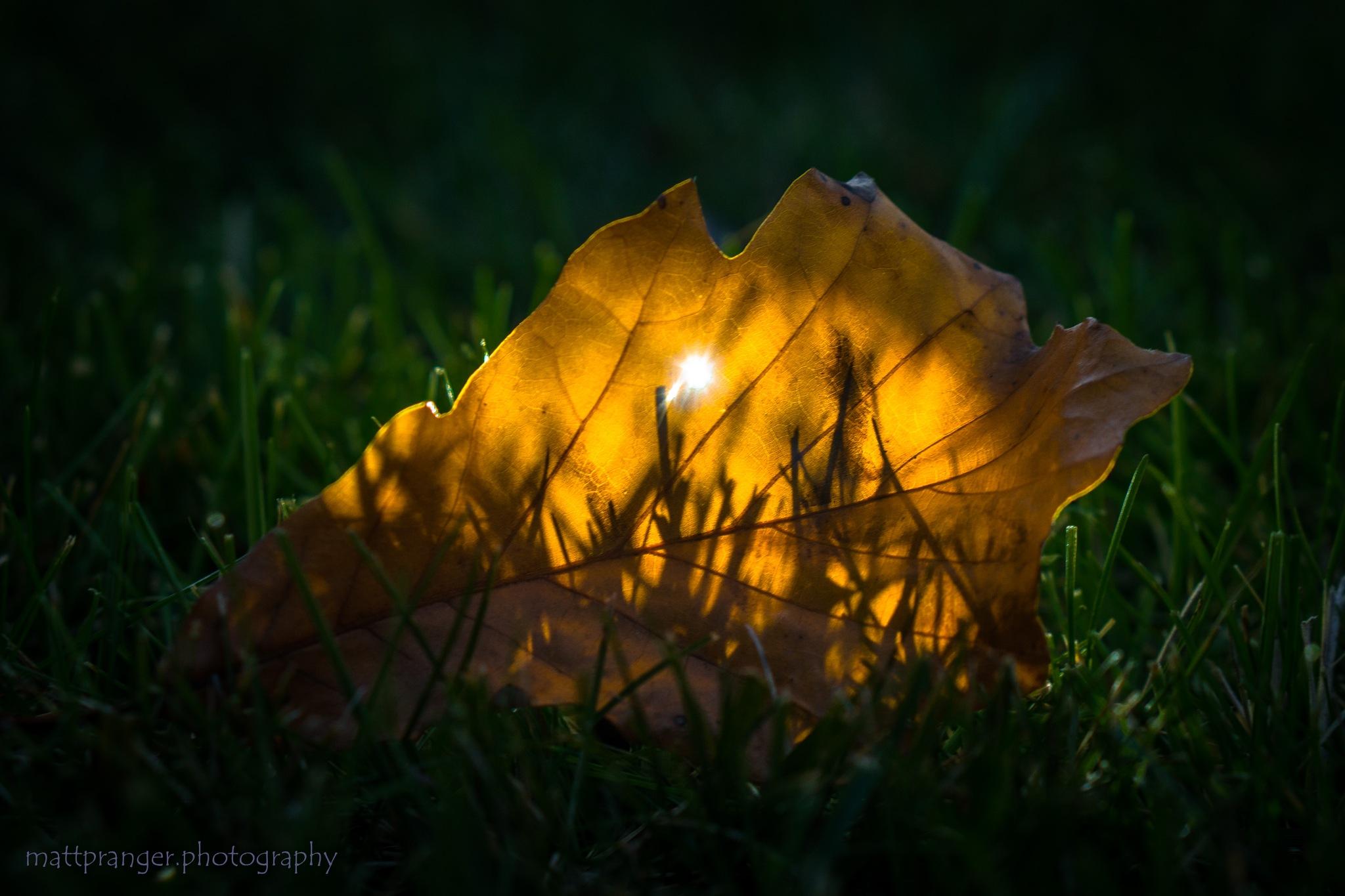 Single Autumn Leaf by Matt Pranger