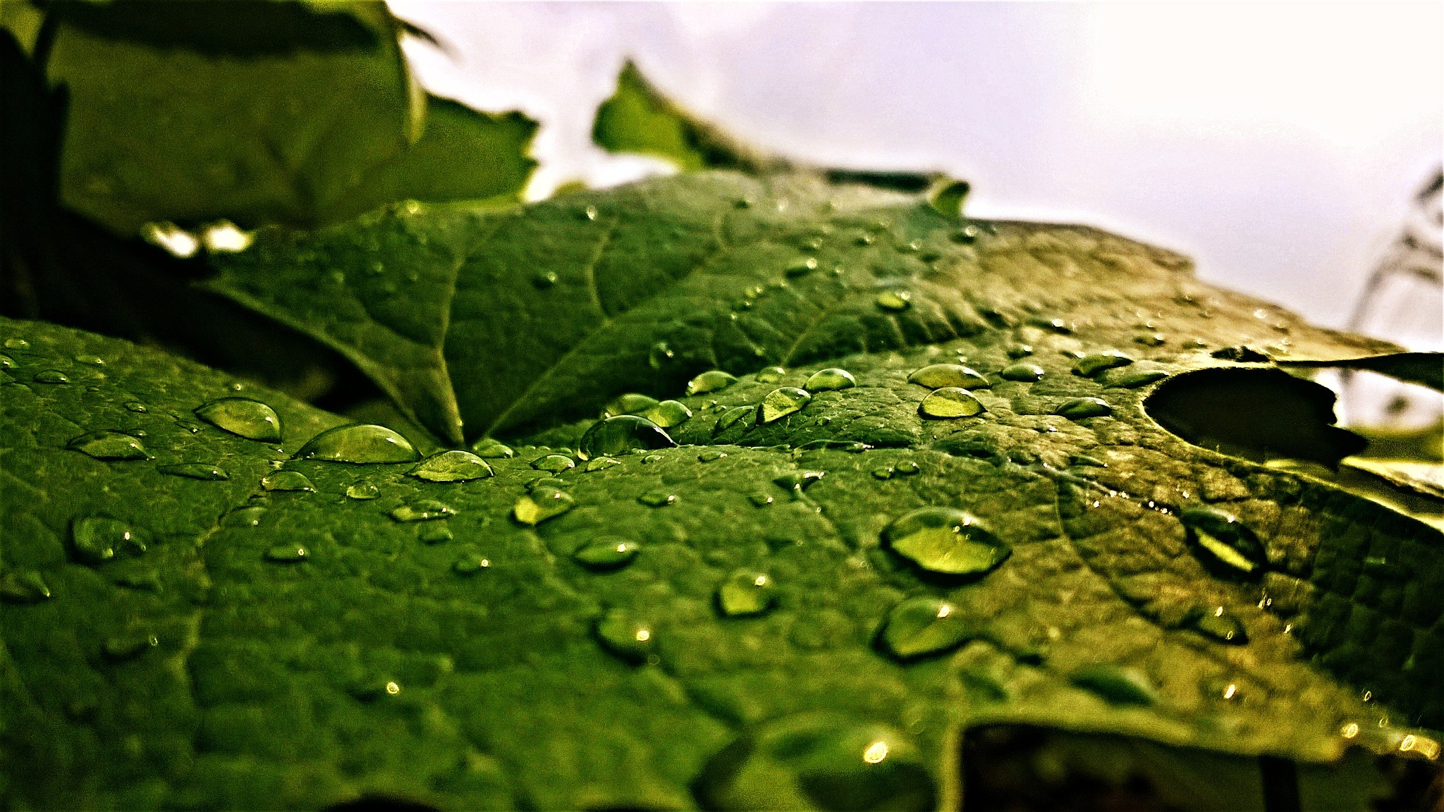 Water Drops  by Chethan2260