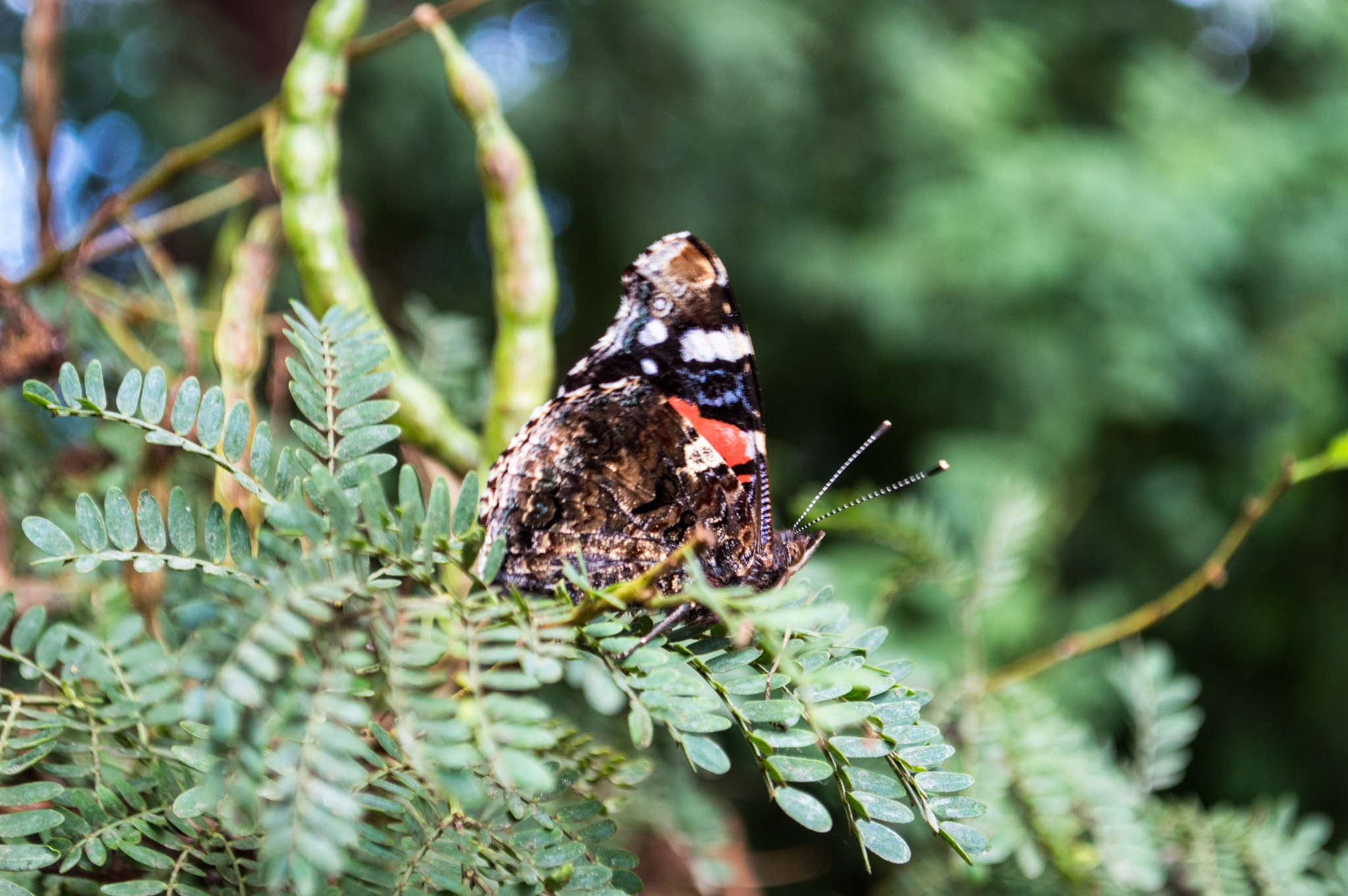 Moth by nedjma badri