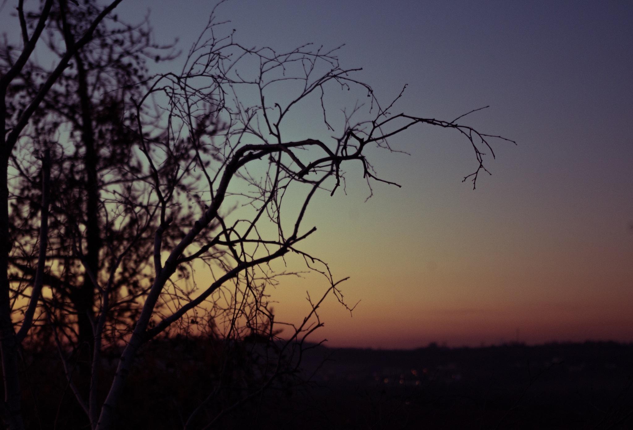 Branches by Martin Bednář