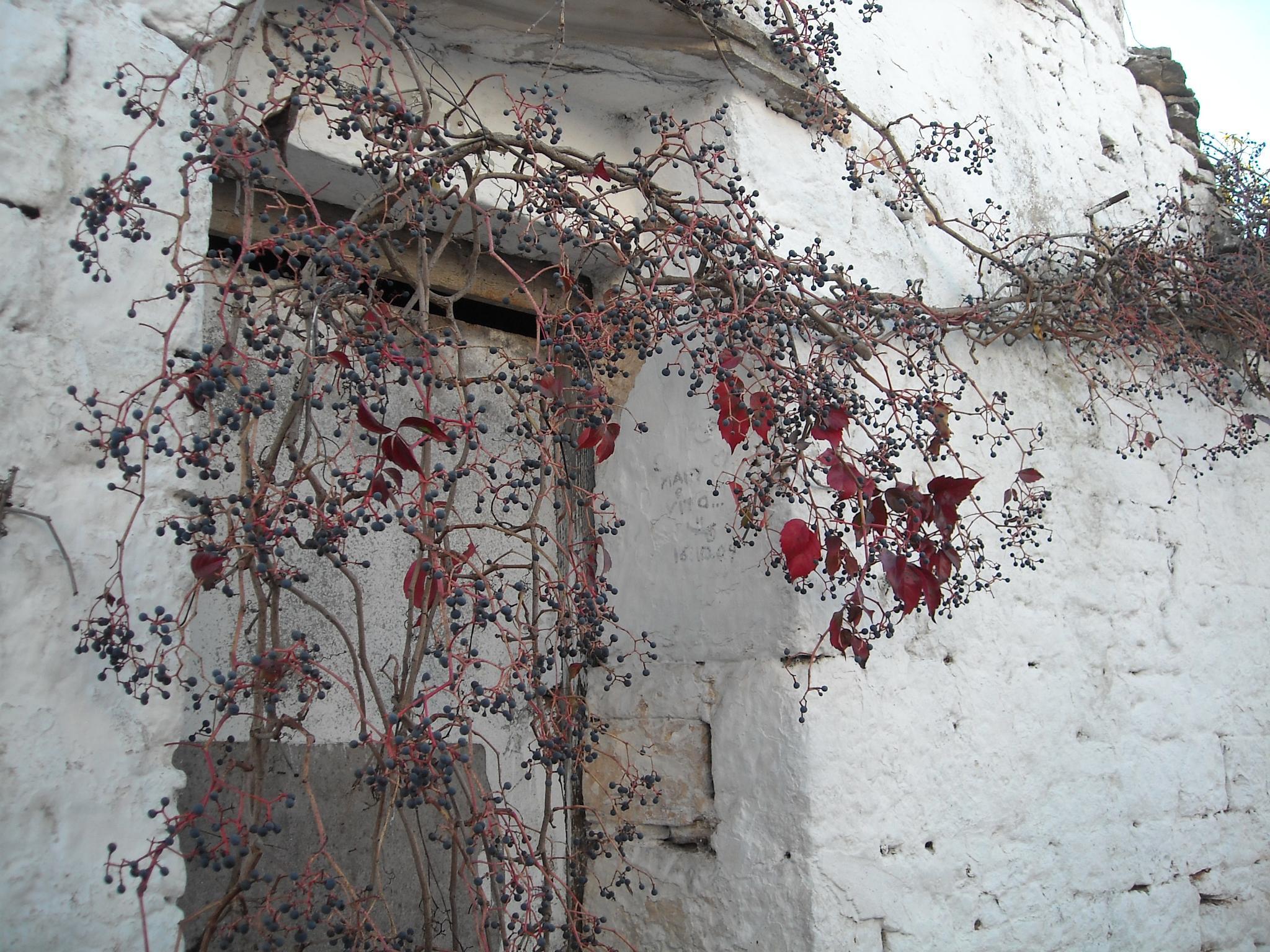 incoming autumn2 by Renato Nacci
