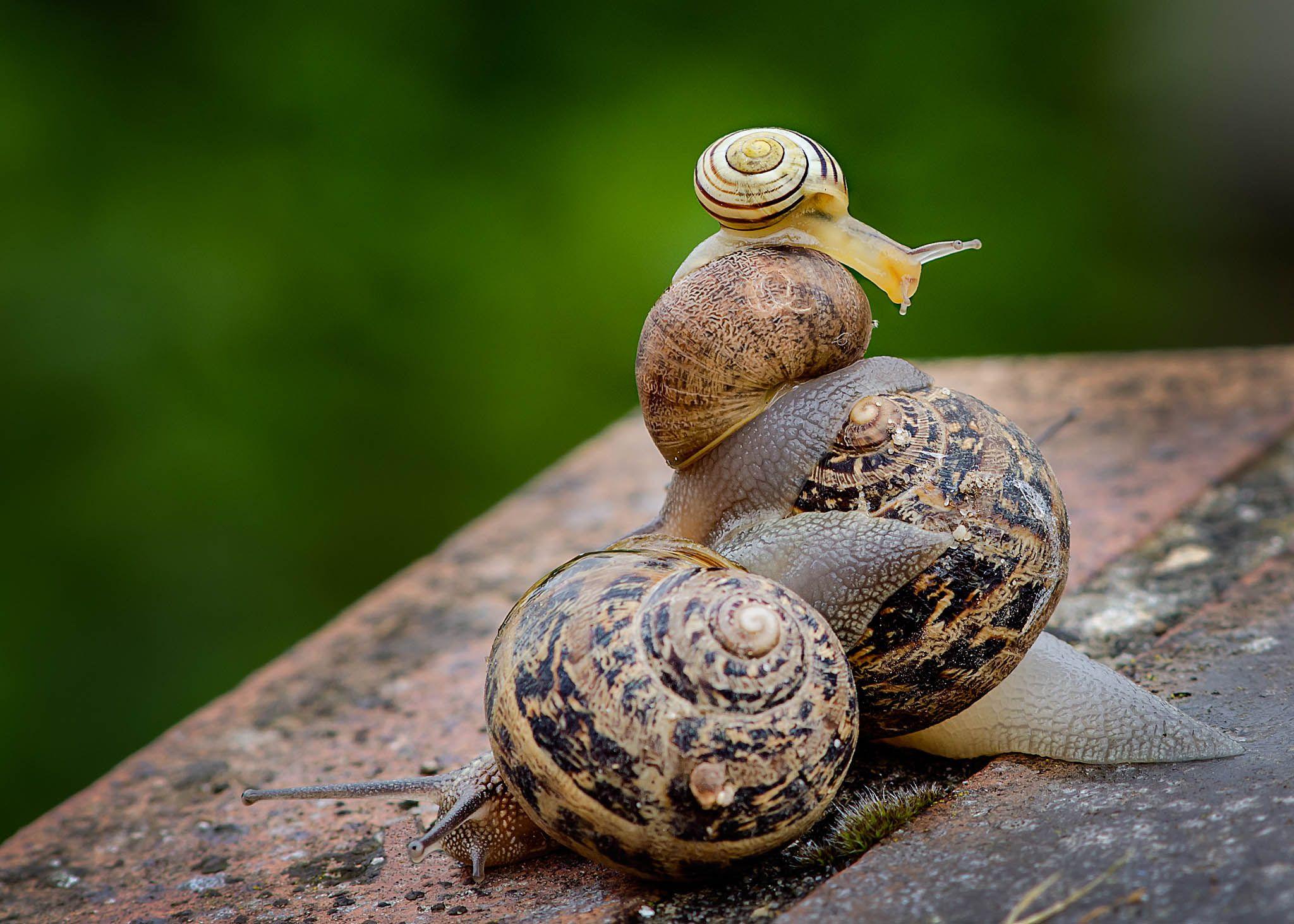 escargot by Muriel Cavanaugh