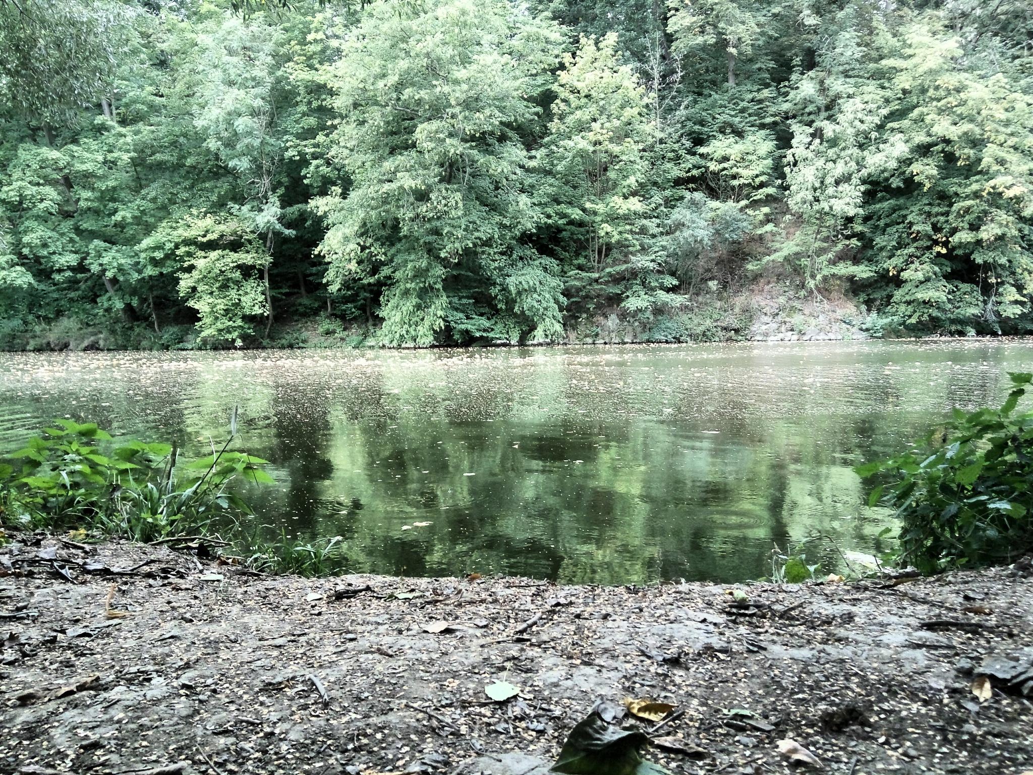 river by davidjanda291