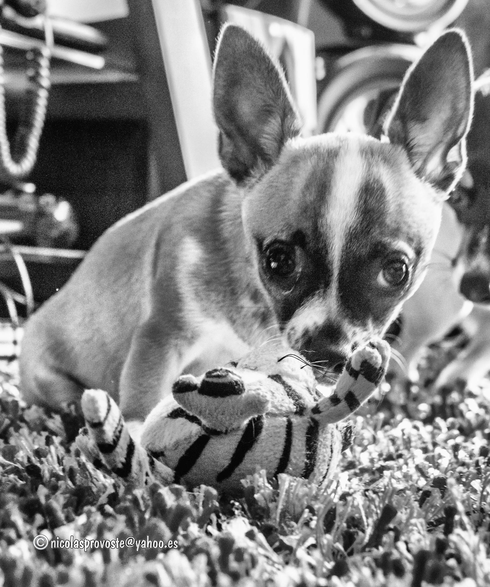 Con el juguete by nicolasprovoste