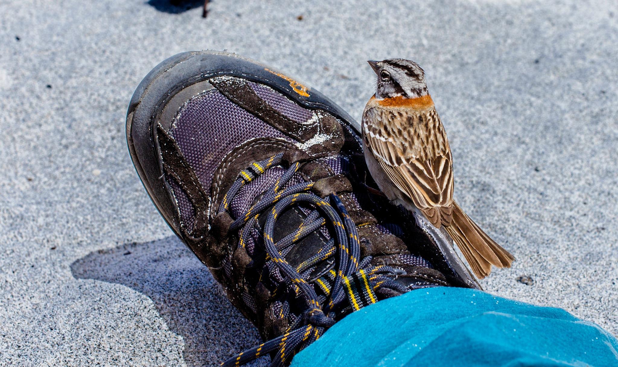 En la punta de mi zapato by nicolasprovoste