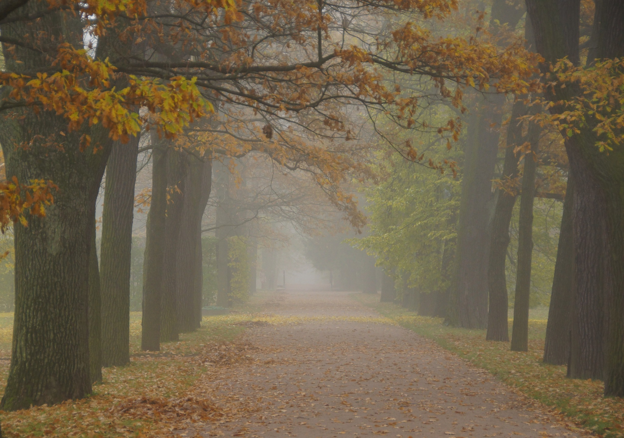 Misty autumn morning                    by Sergey Andreevich
