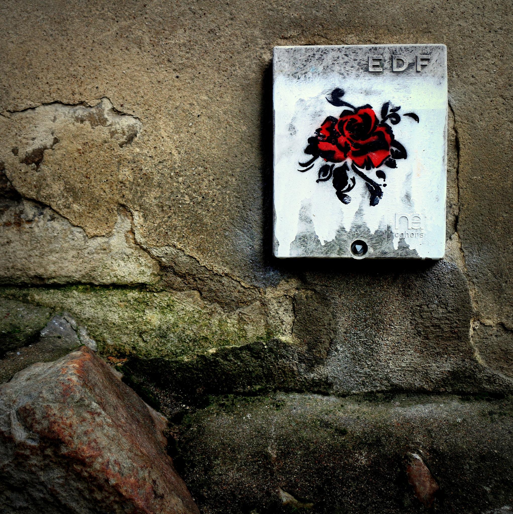 La rose électrique by polken
