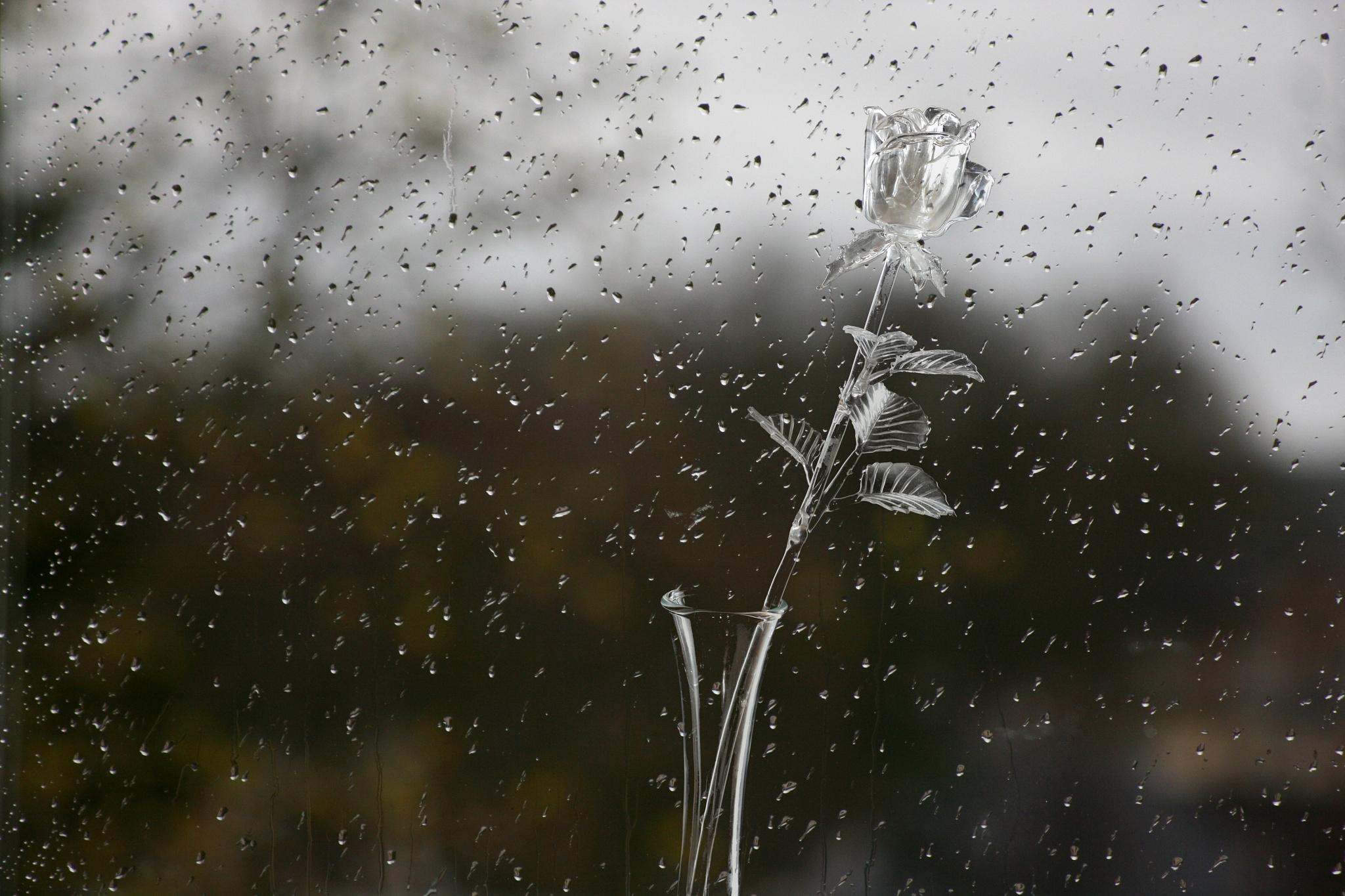 Elegant rain... by Zenonas Meškauskas