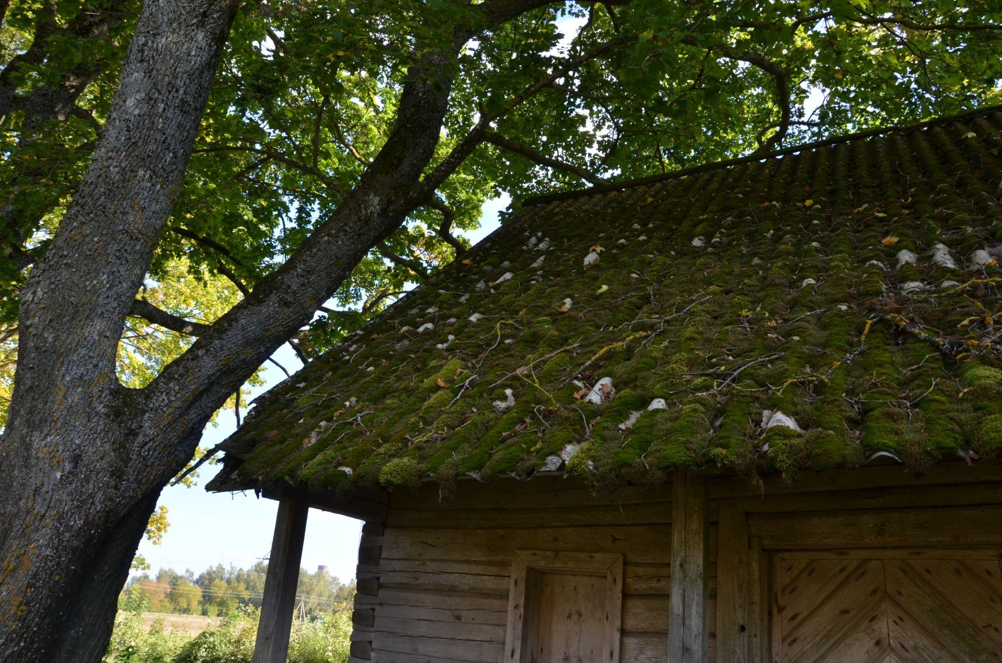 Empty homestead (7) by Zenonas Meškauskas