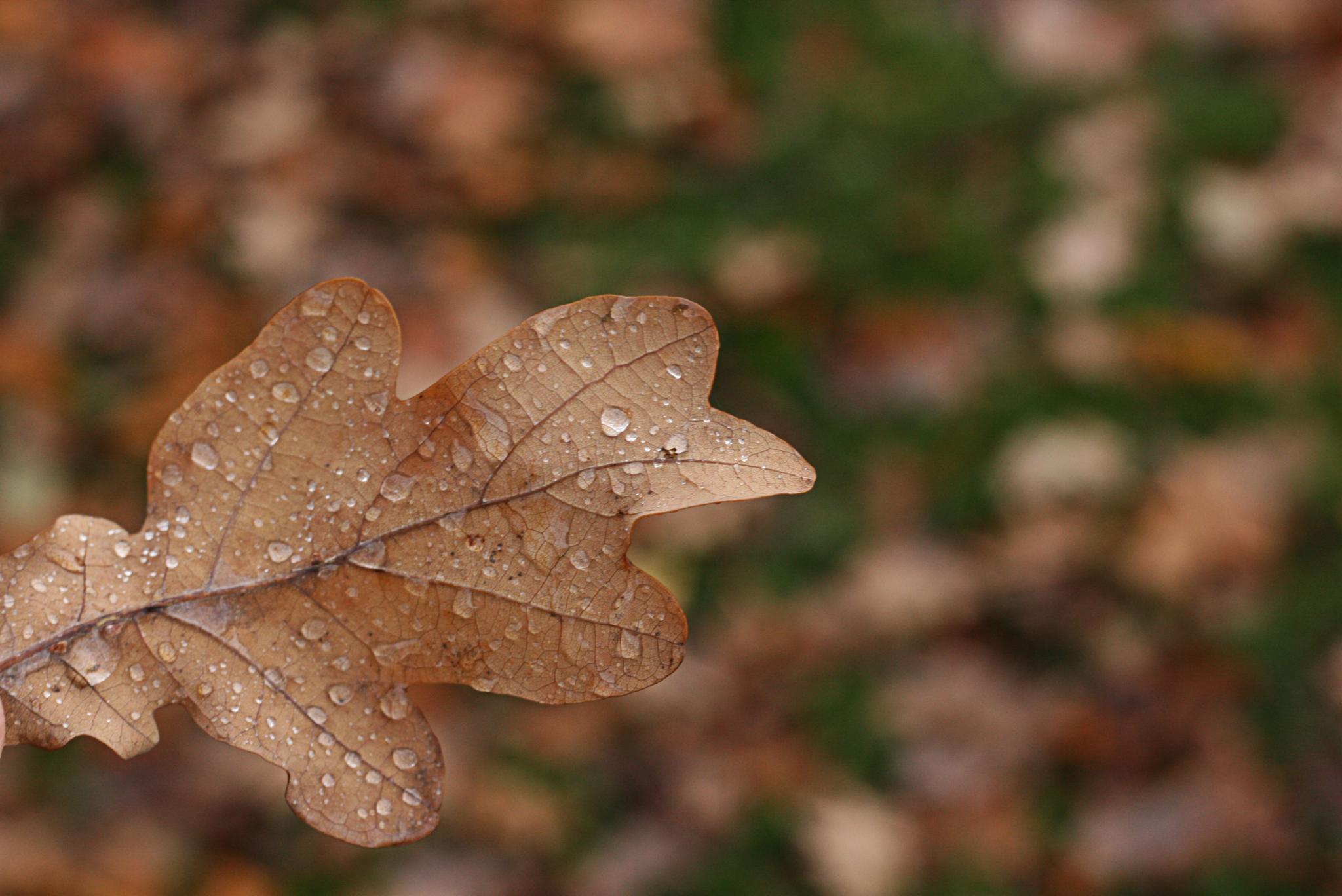Rain droplets by Zenonas Meškauskas