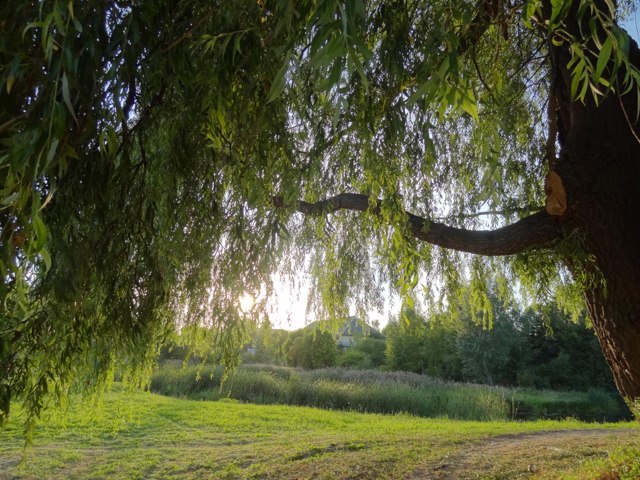 Evening. Near the river. by Zenonas Meškauskas