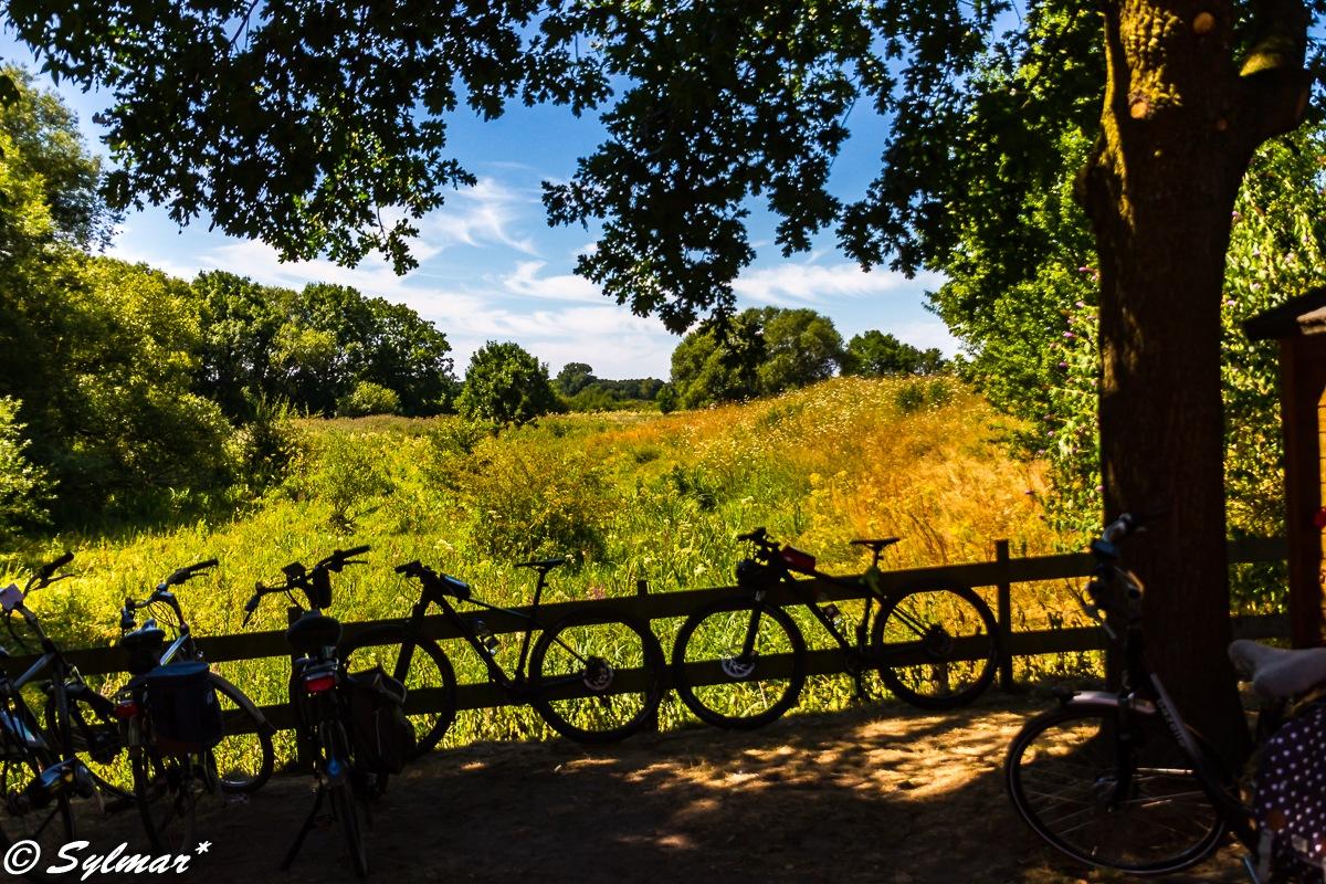 Plenty of summer in the Netherlands, so wonderful cycling again. by Sylmar