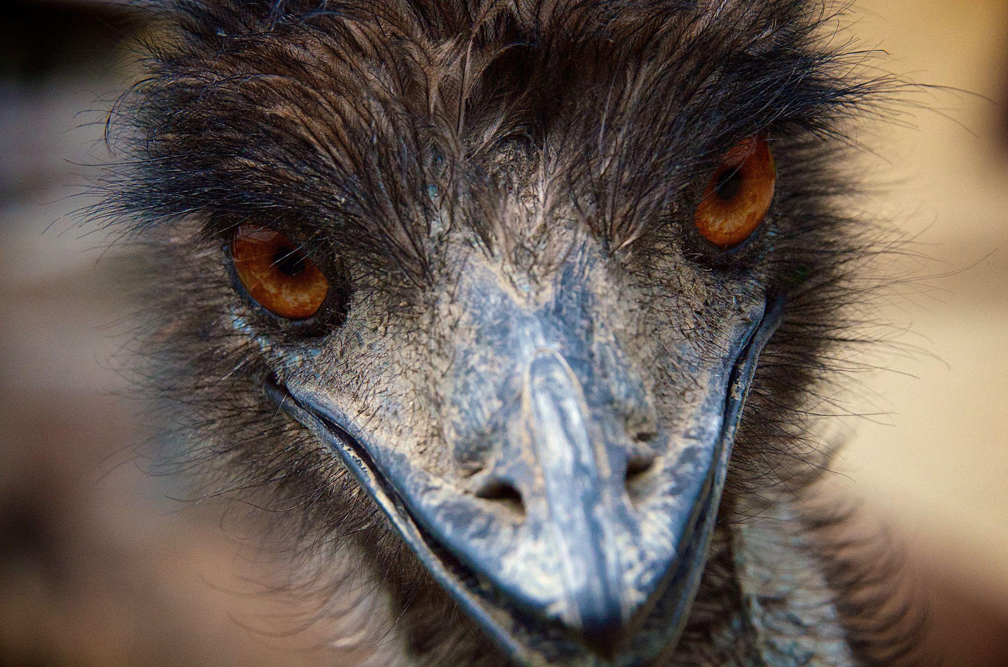 Emu by matsuzawa