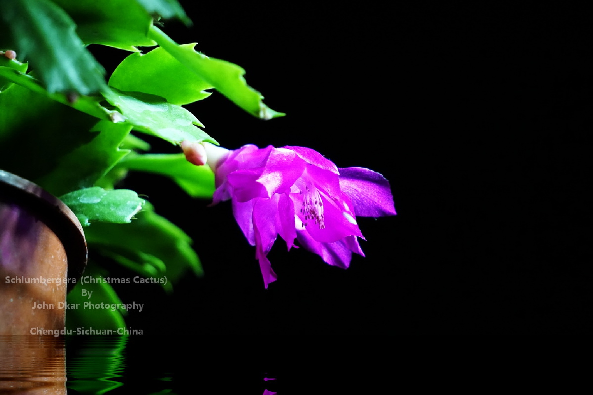 Flowers adapted to Chengdu Sichuan China climate (0002) by JohnDkar
